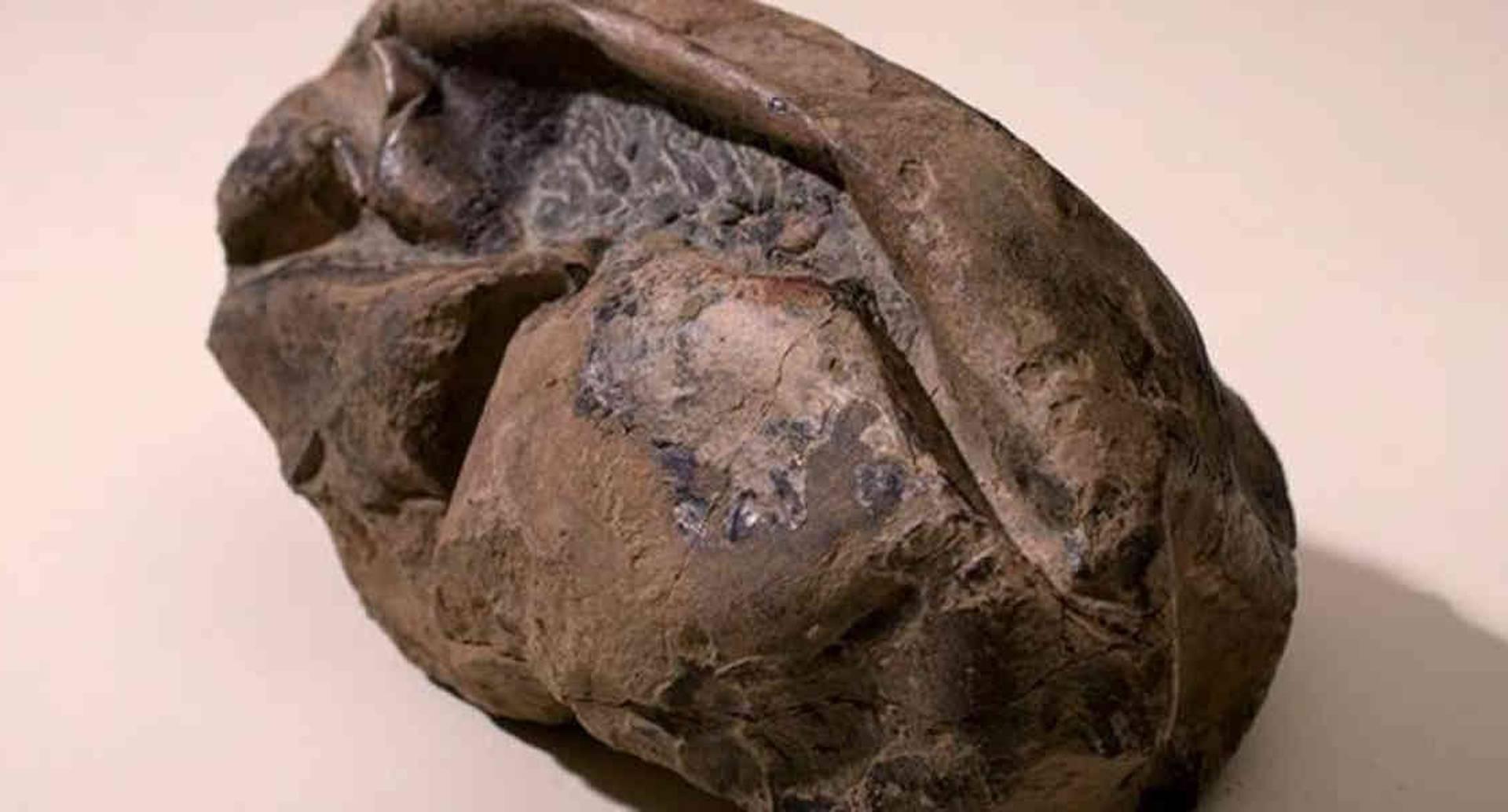 Este es el huevo de dinosauro encontrado en la Antártida. Foto: HANDOUT / CHILEAN NATIONAL MUSEUM OF NATURAL HISTORY / AFP