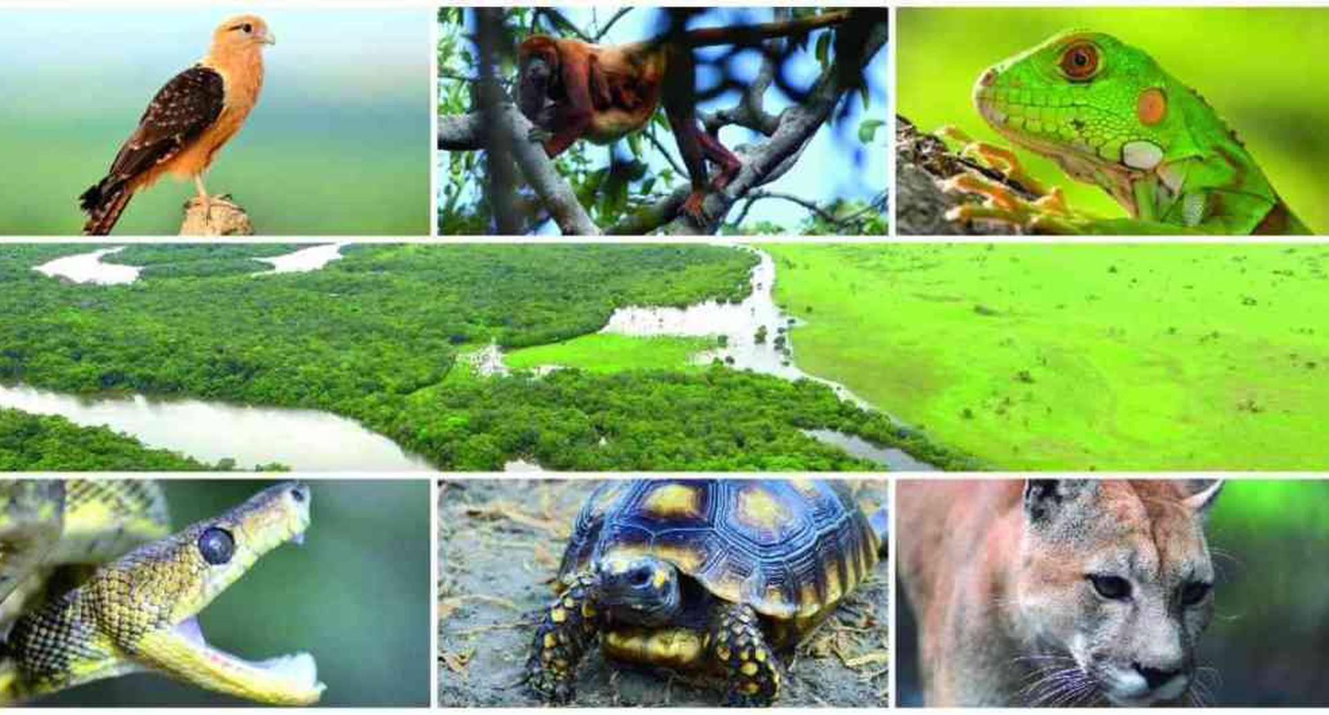 La pérdida de biodiversidad pone en riesgo la alimentación, la salud y el medio ambiente. Esta muestra es del río Bita en la Cuenca del Orinoco. Foto montaje: archivo/Semana