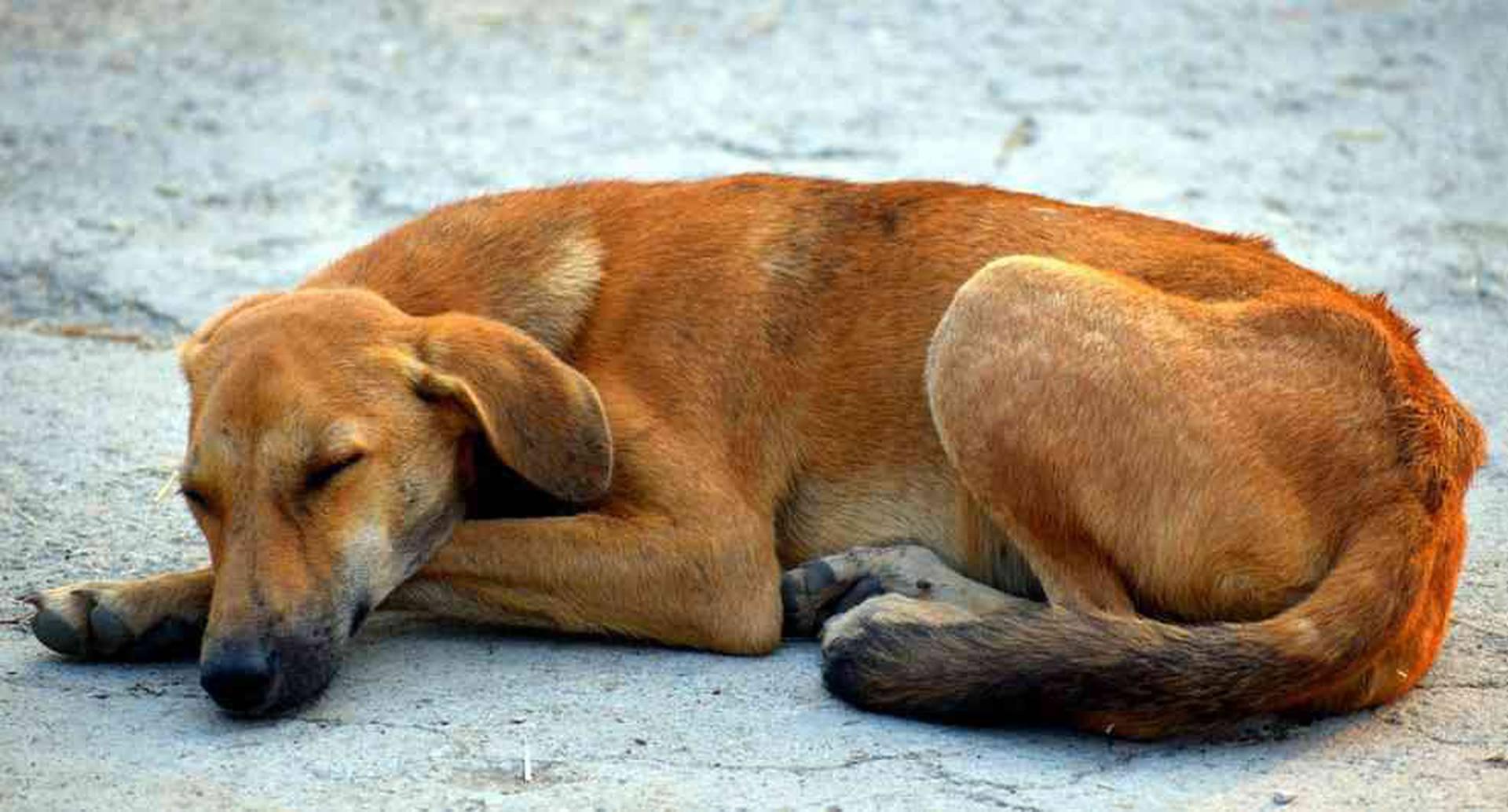 Se estima que en Colombia existen cerca de 1 millón de animales domésticos en estado de abandono. Foto: Pixabay.