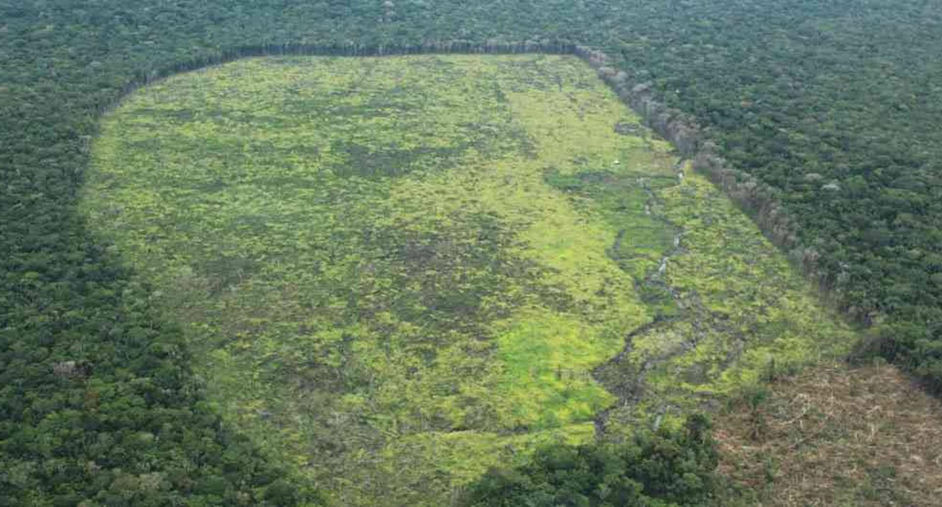 Uno de los departamentos más deforestados en el país es el Guaviare. Foto: FCDS