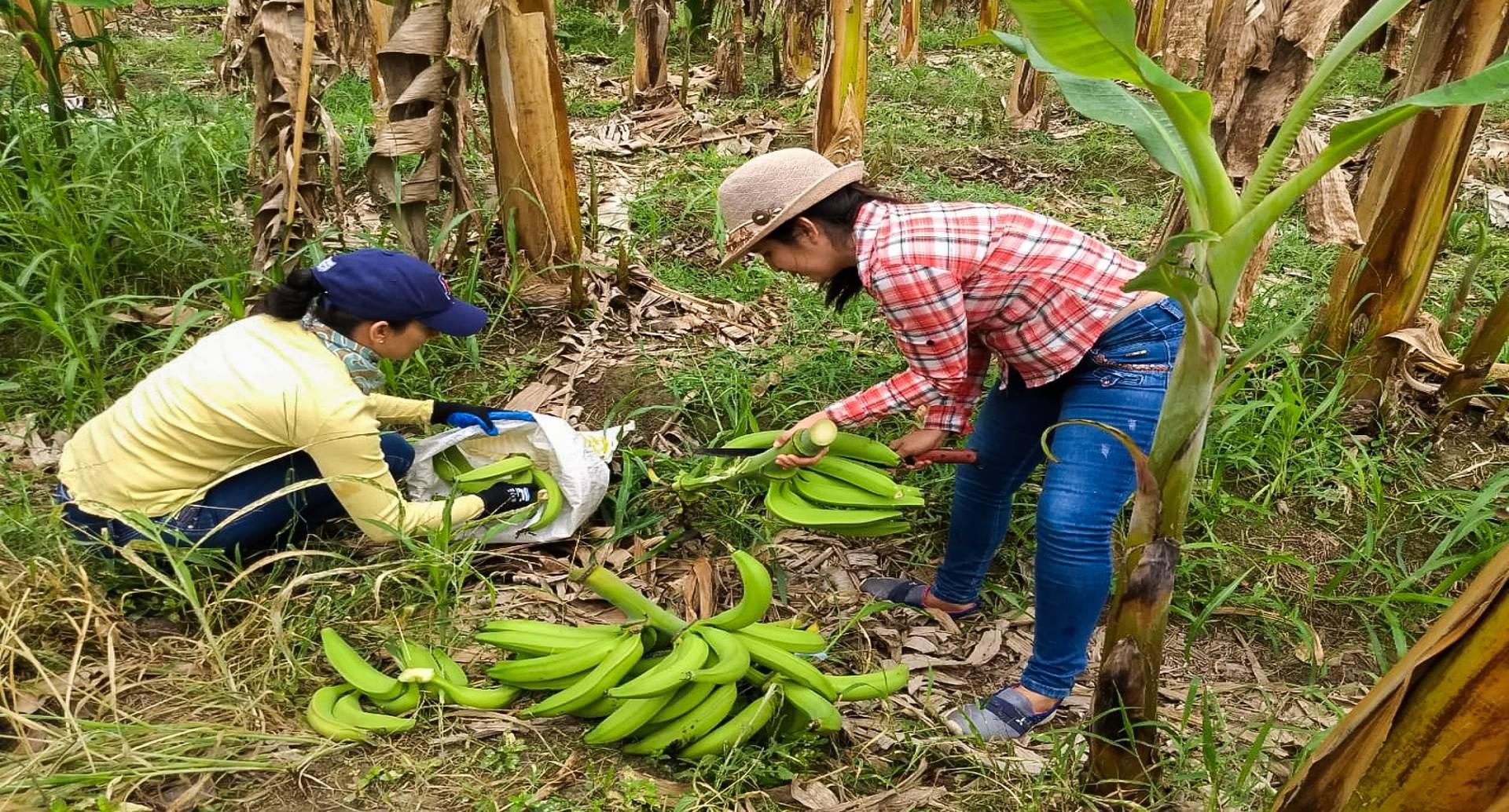 Algunos miembros de la asociación revisan sus cosechas para verificar su calidad.