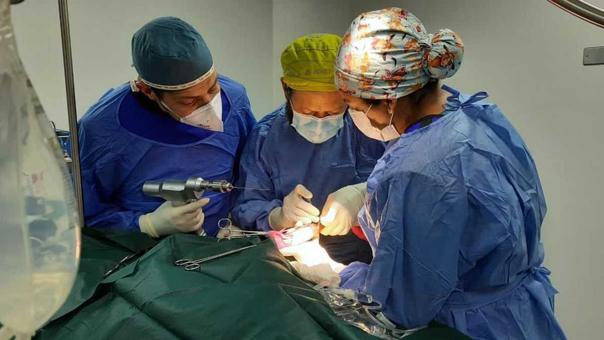 Cirugía a venado hallado en Bogotá