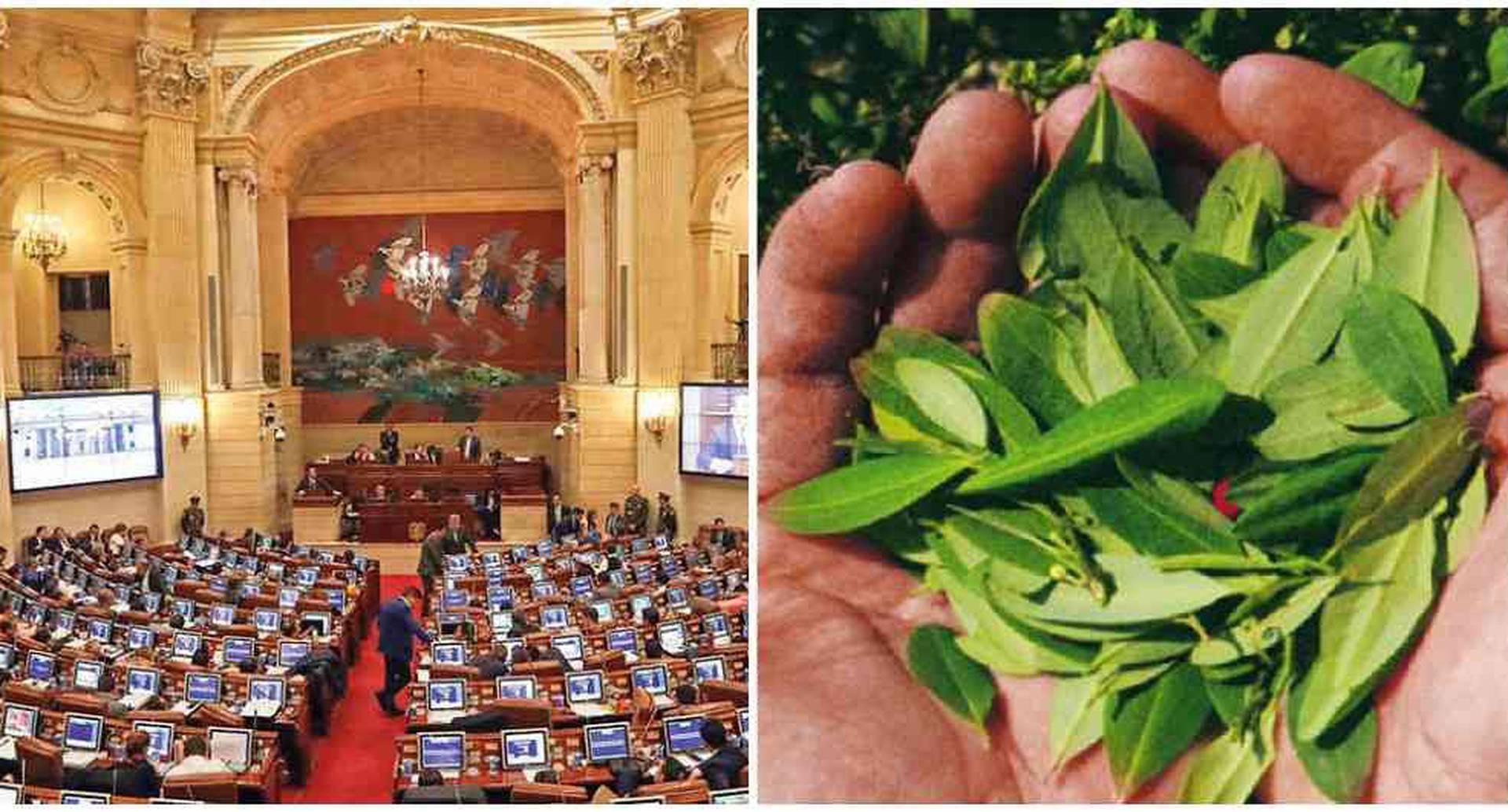 En el congreso se discutirá si es posible regular el consumo adulto de los derivados de la hoja de coca.