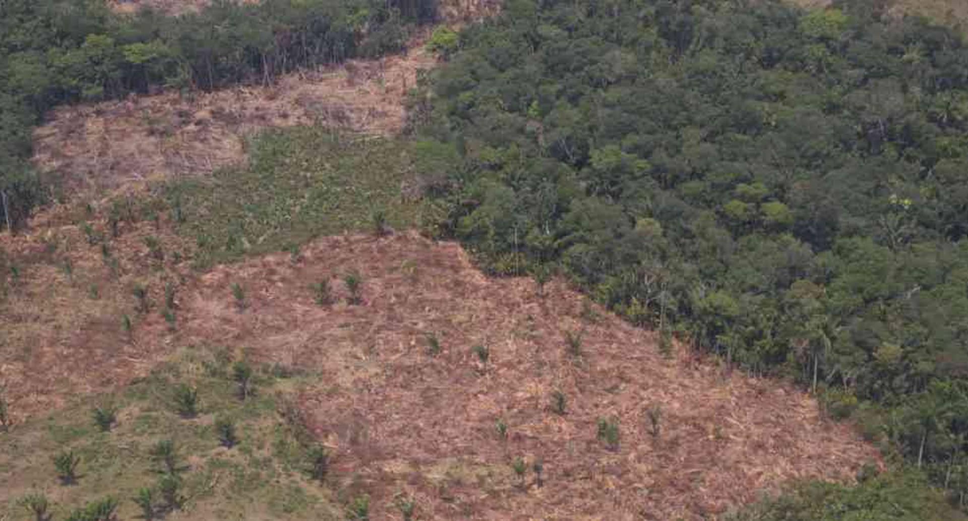 El acaparamiento de tierras para la ganadería extensiva es una de las principales causas de la deforestación en Guaviare. Foto: archivo particular.