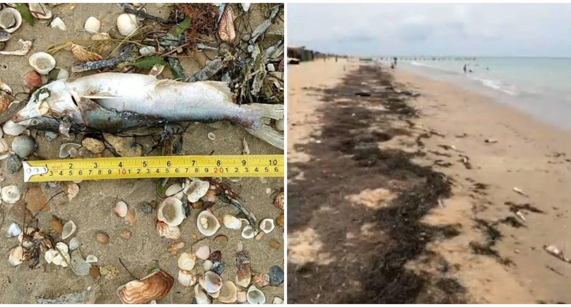 Mortandad de peces en playas de Manaure, La Guajira. Septiembre de 2020.