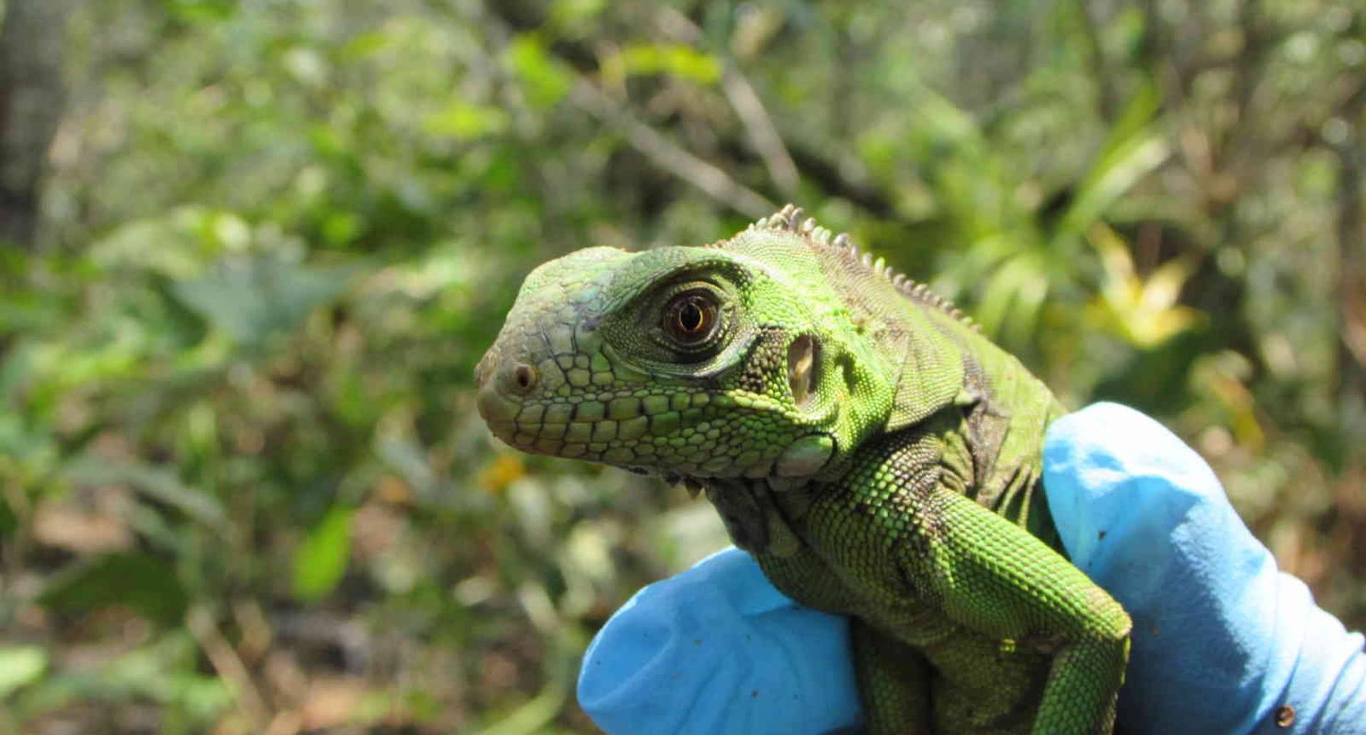El Parque Natural Regional Laguna de Lomalinda en Puerto Lleras es el nuevo hábitat de 70 animales silvestres que fueron víctimas del tráfico ilegal de fauna. Foto: Cormacarena