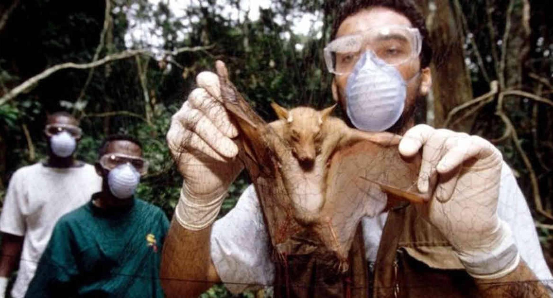 """Investigadores que estudian el ébola tomaron muestras de murciélagos salvajes, que se cree que fueron la fuente de la """"propagación"""" en humanos. Foto: SCIENCE PHOTO LIBRARY vía BBC."""