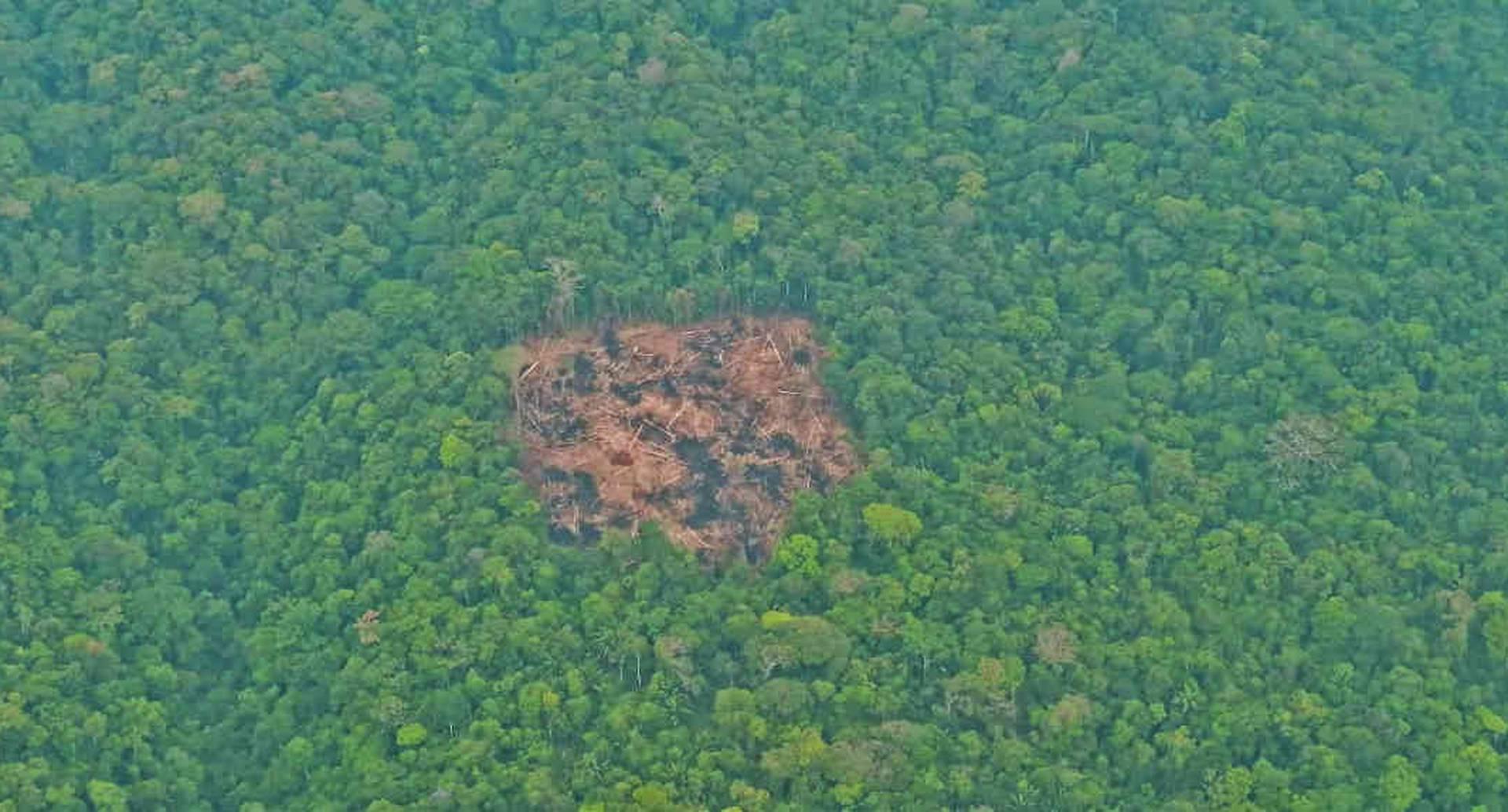 La Serranía de La Macarena se ha convertido en foco de deforestación en los últimos años por parte de mafias acaparadoras de tierras.