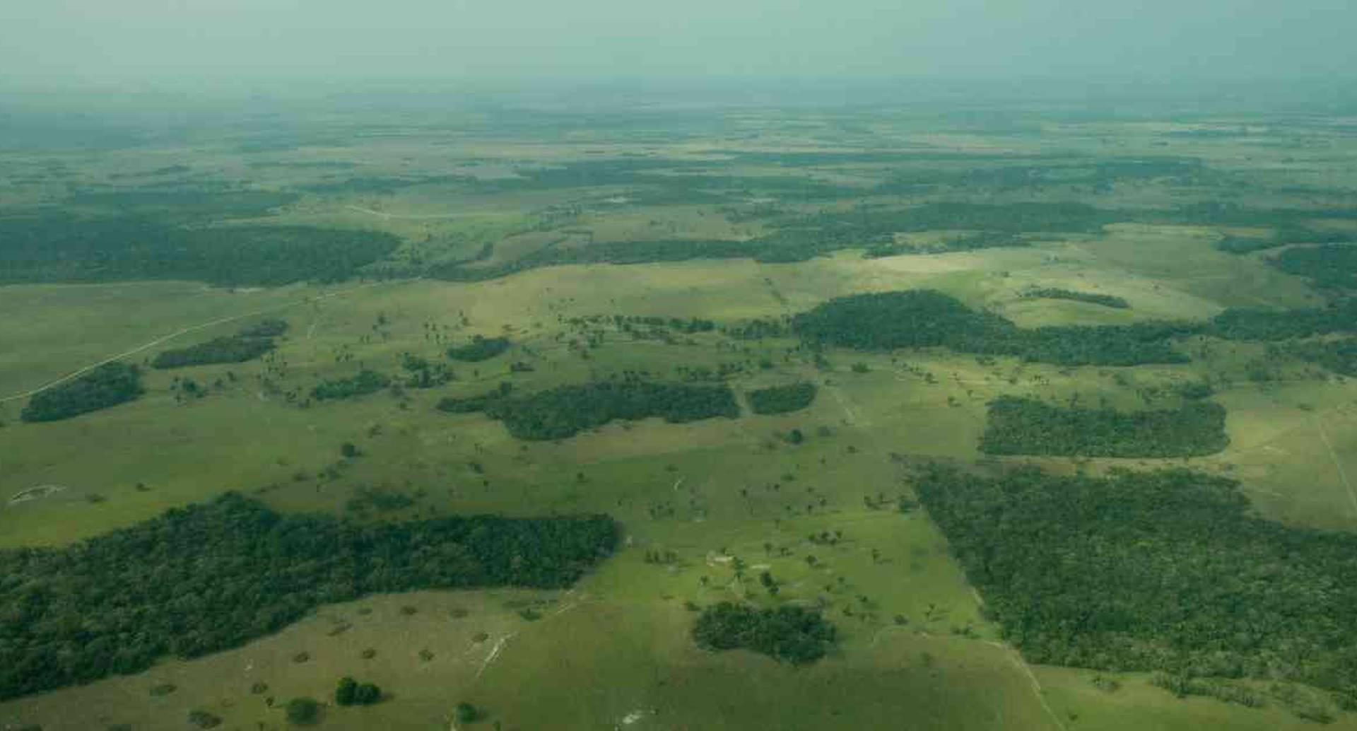 Por primera vez la discusión de la deforestación se centra en las cadenas productivas. Foto: Alvaro Cardona/Semana