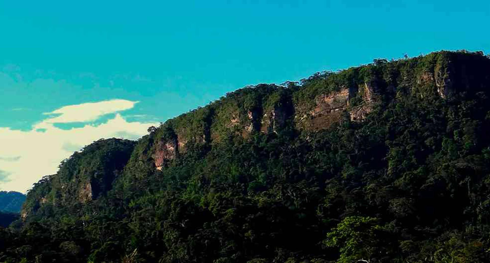 Las áreas protegidas están siendo seriamente afectadas por la deforestación.