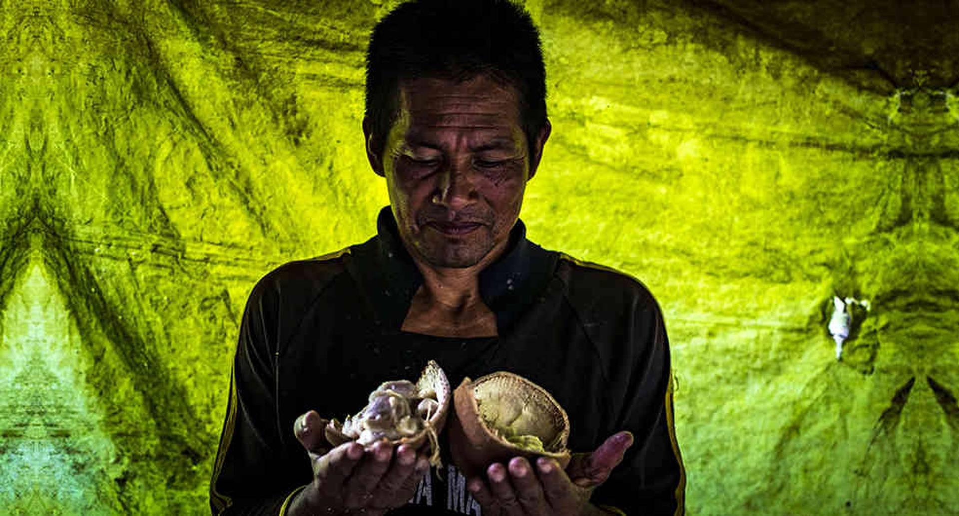 Con la recuperación de la paz y la protección de los derechos en los territorios, también llega la seguridad alimentaria para sus habitantes.