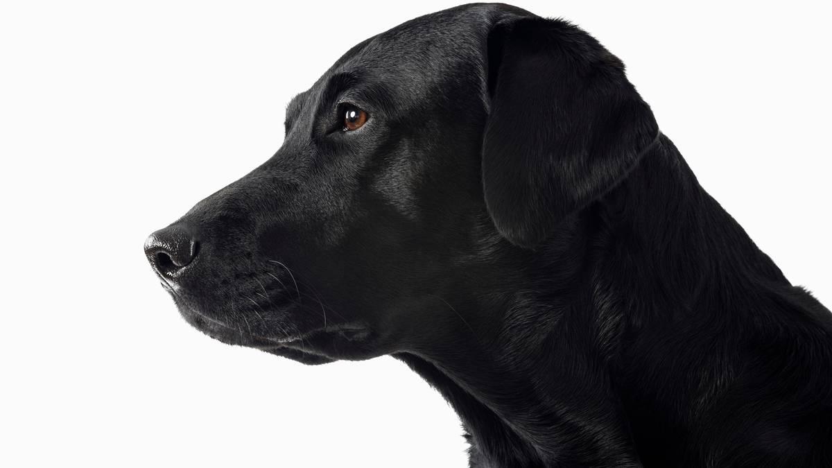 Viral | Video: perro callejero ingresó a una veterinaria para que le curaran las heridas