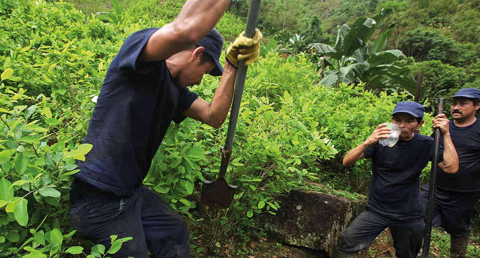 En 2019, la fuerza pública reportó 94.600 hectáreas de coca erradicadas, superando el objetivo de 80.000. Para este año determinaron una meta de 130.000.