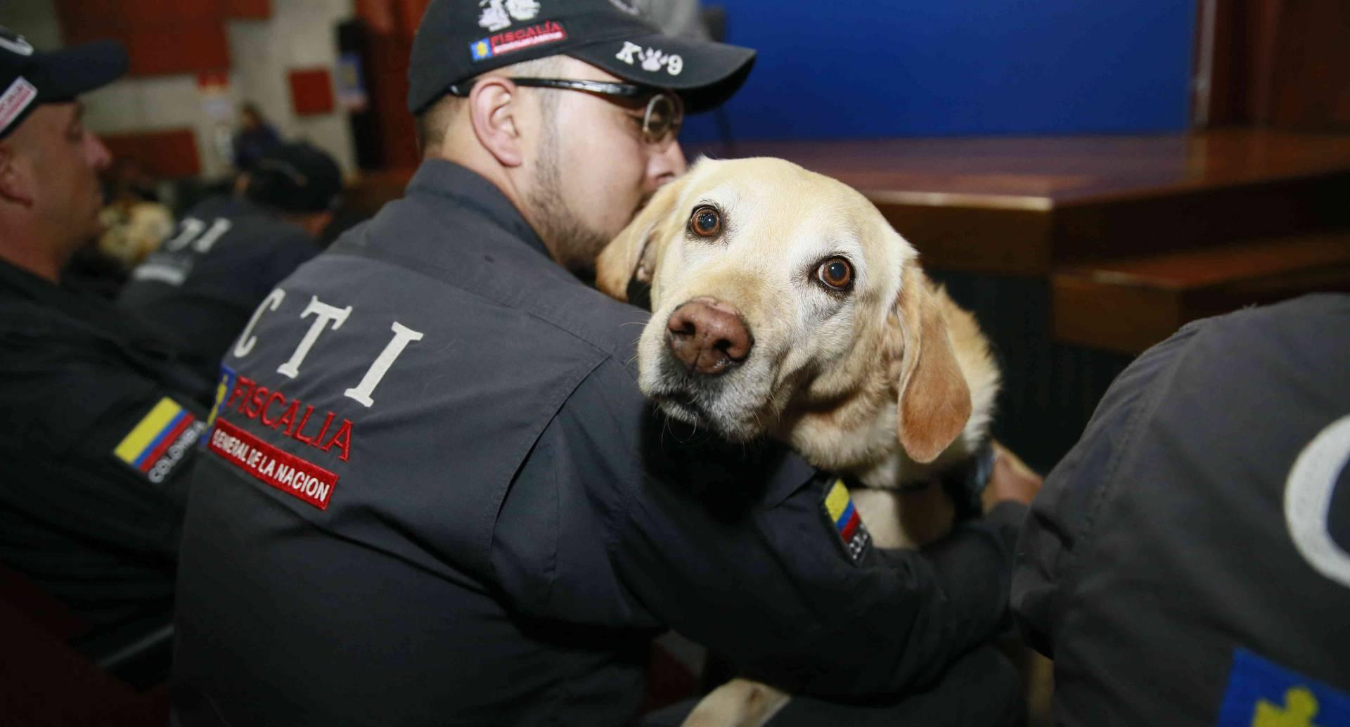 Los 14 perros fueron adoptados por los respectivos investigadores que los tenían bajo su cuidado.