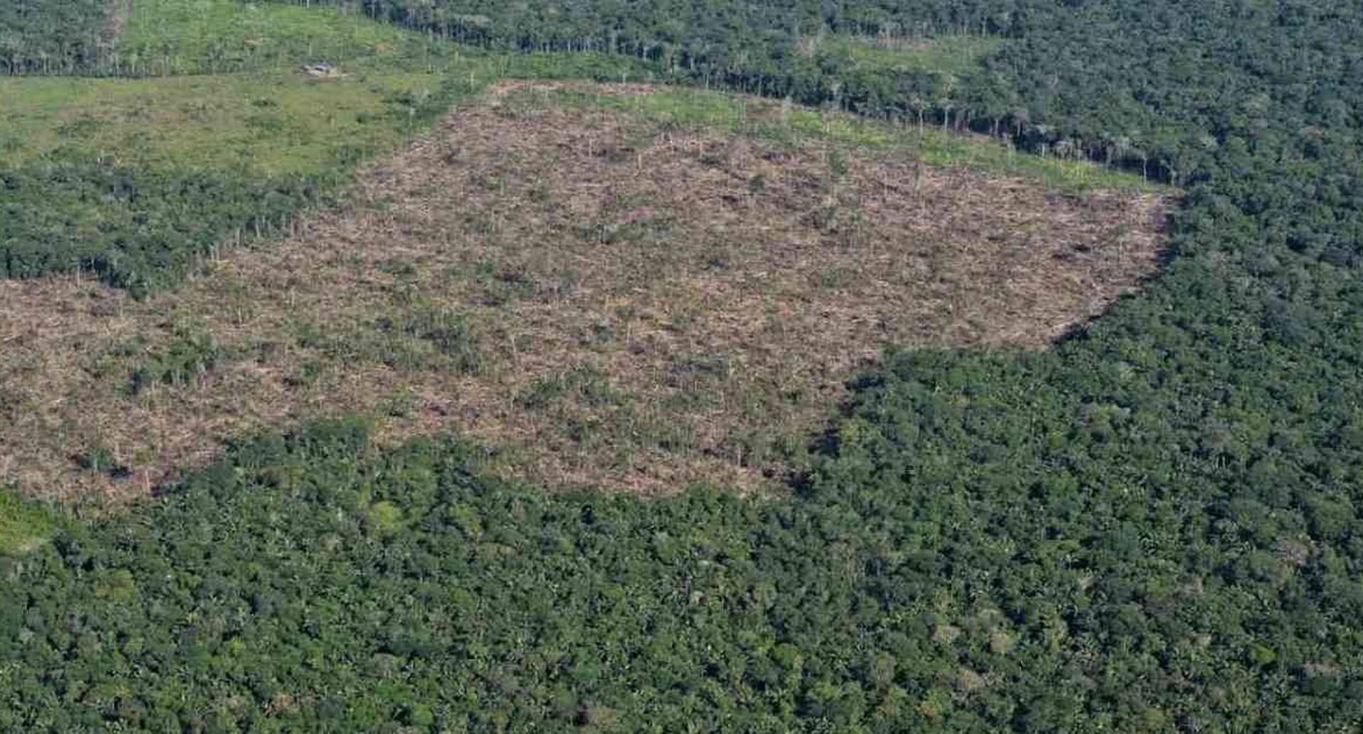 Procuraduría investiga tres corporaciones y gobernaciones por deforestación