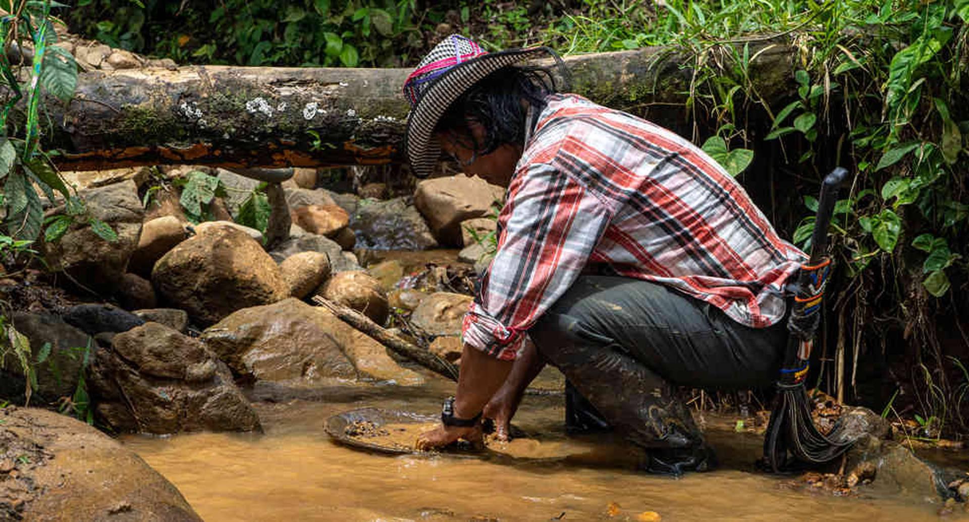 Con la batea, herramienta principal para barequear, los indígenas de Frontino extraen oro libre de mercurio.