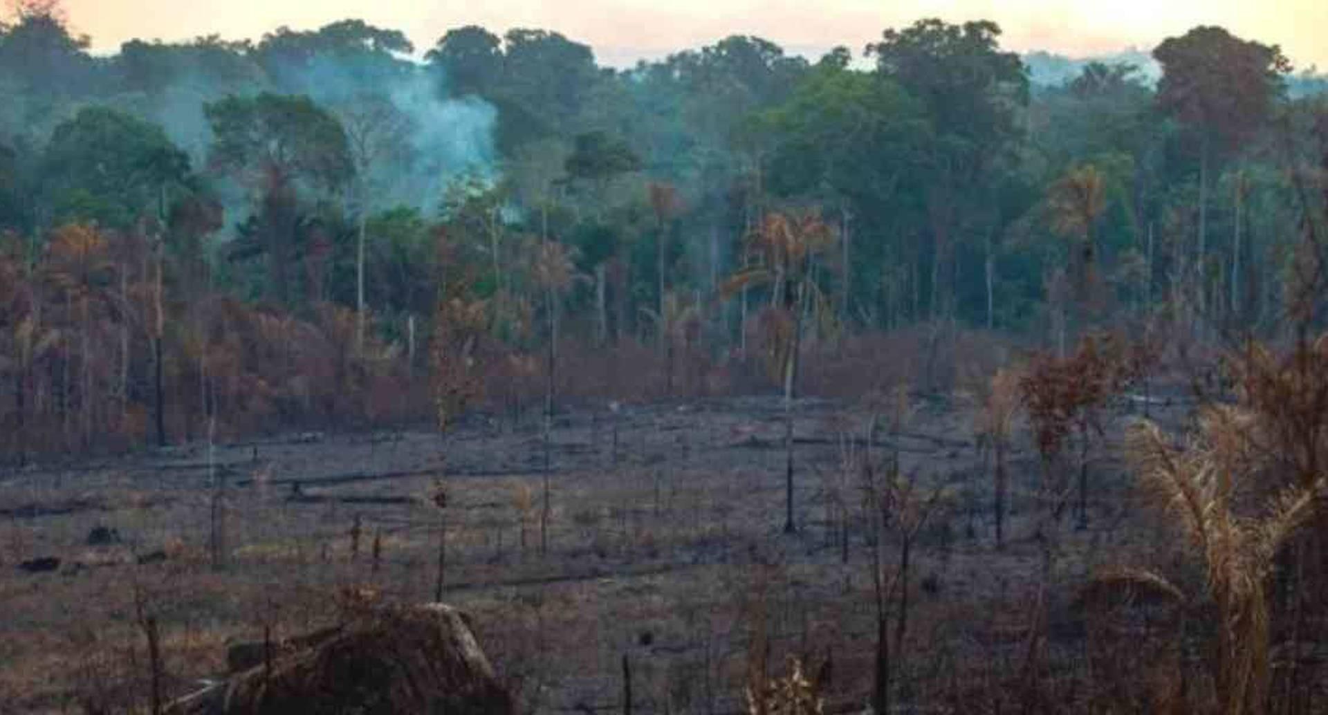 Los incendios son una de las principales causas de la deforestación en Brasil . Foto: Getty Images