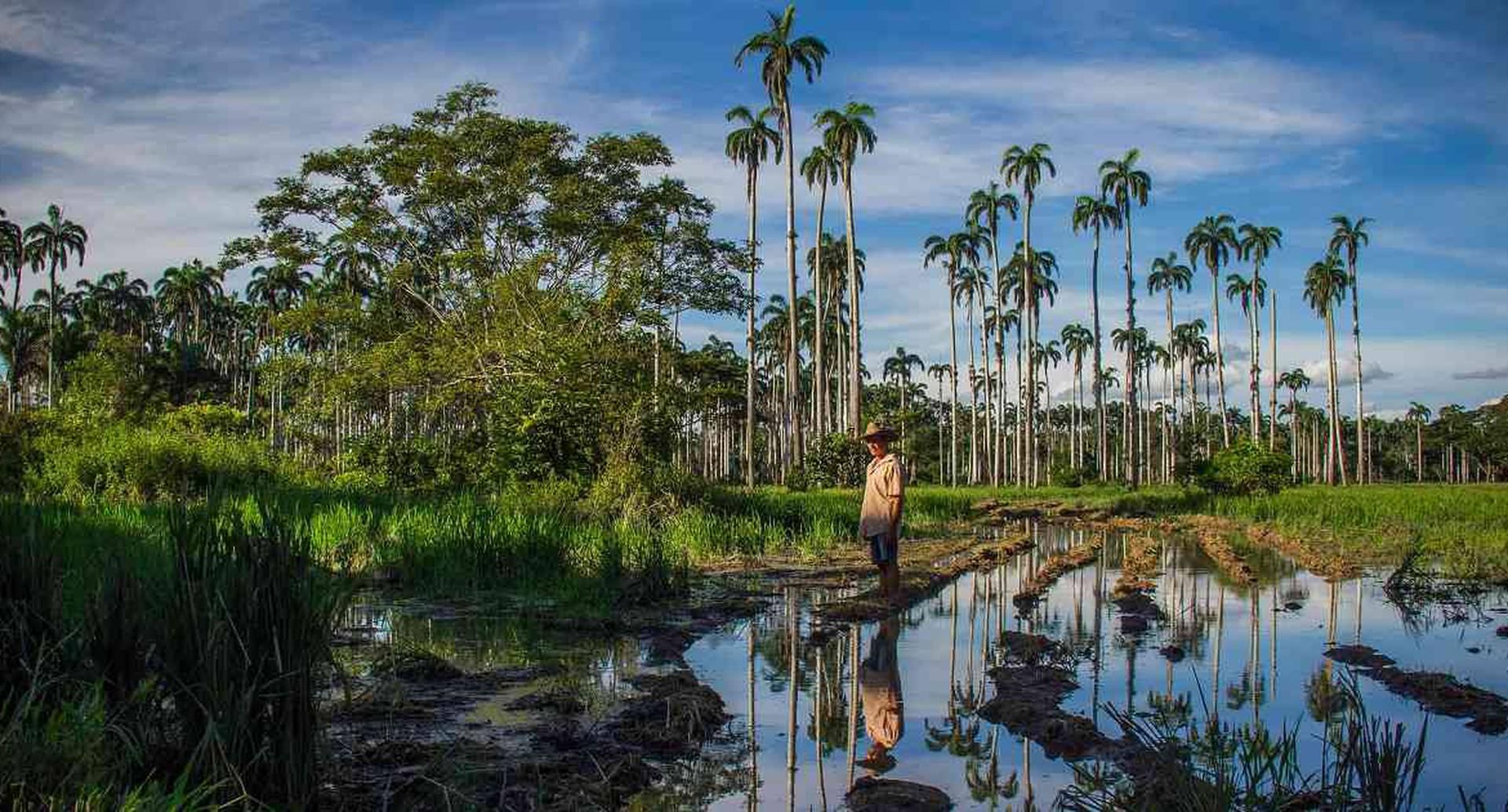 La deforestación es uno de los motores de pérdida de la diversidad biológica en Colombia. Foto: José Iván Cano/ Instituto Humboldt