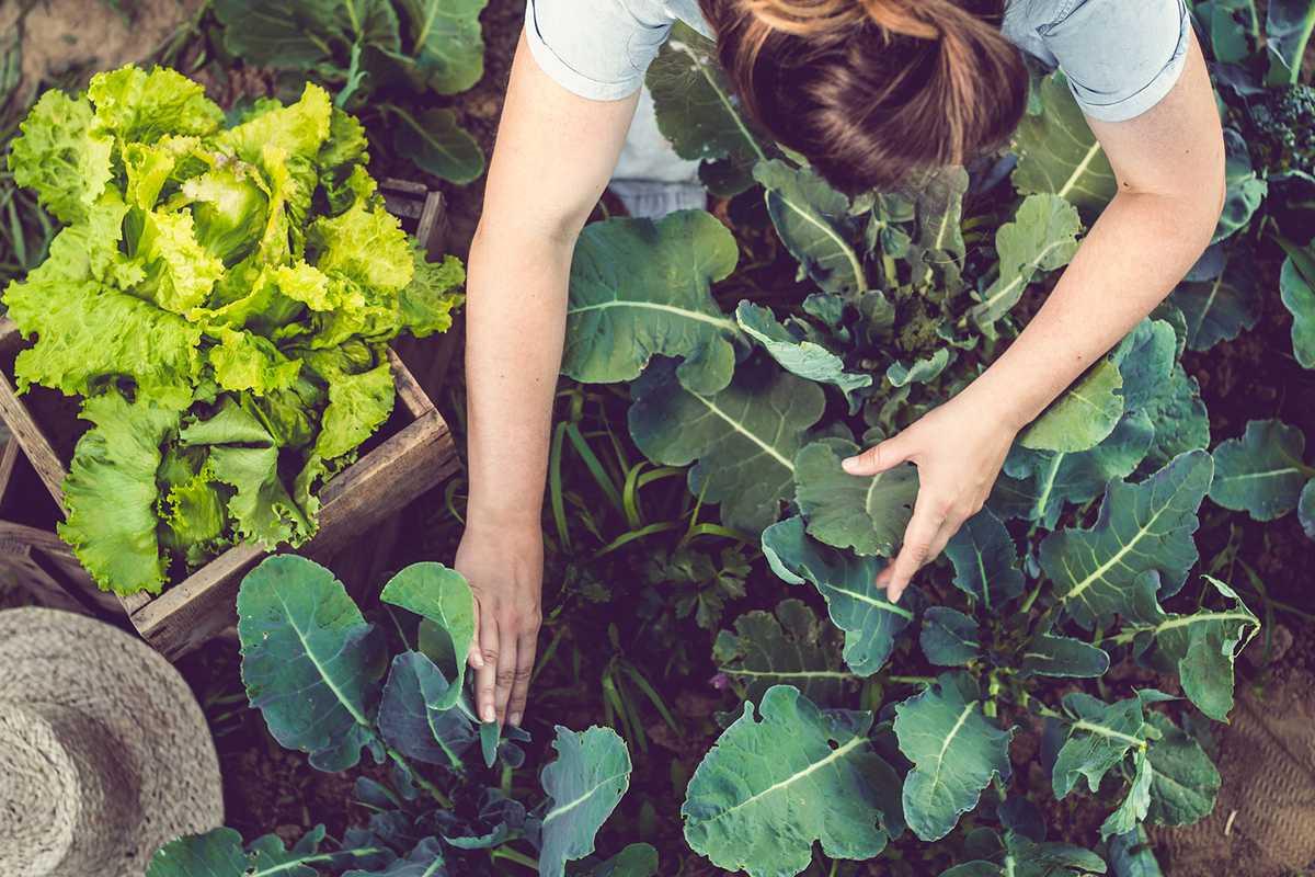 En el tema de alimentación son varios los desafíos para la industria y los consumidores.