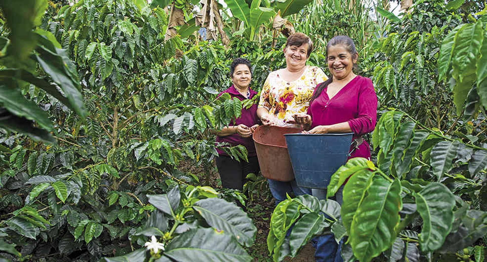 ¿Por qué los campesinos de Viotá no abandonan el café? ¿Por qué un dron paralizó la misa del domingo en Tibirita? Conózcalo en estas líneas.