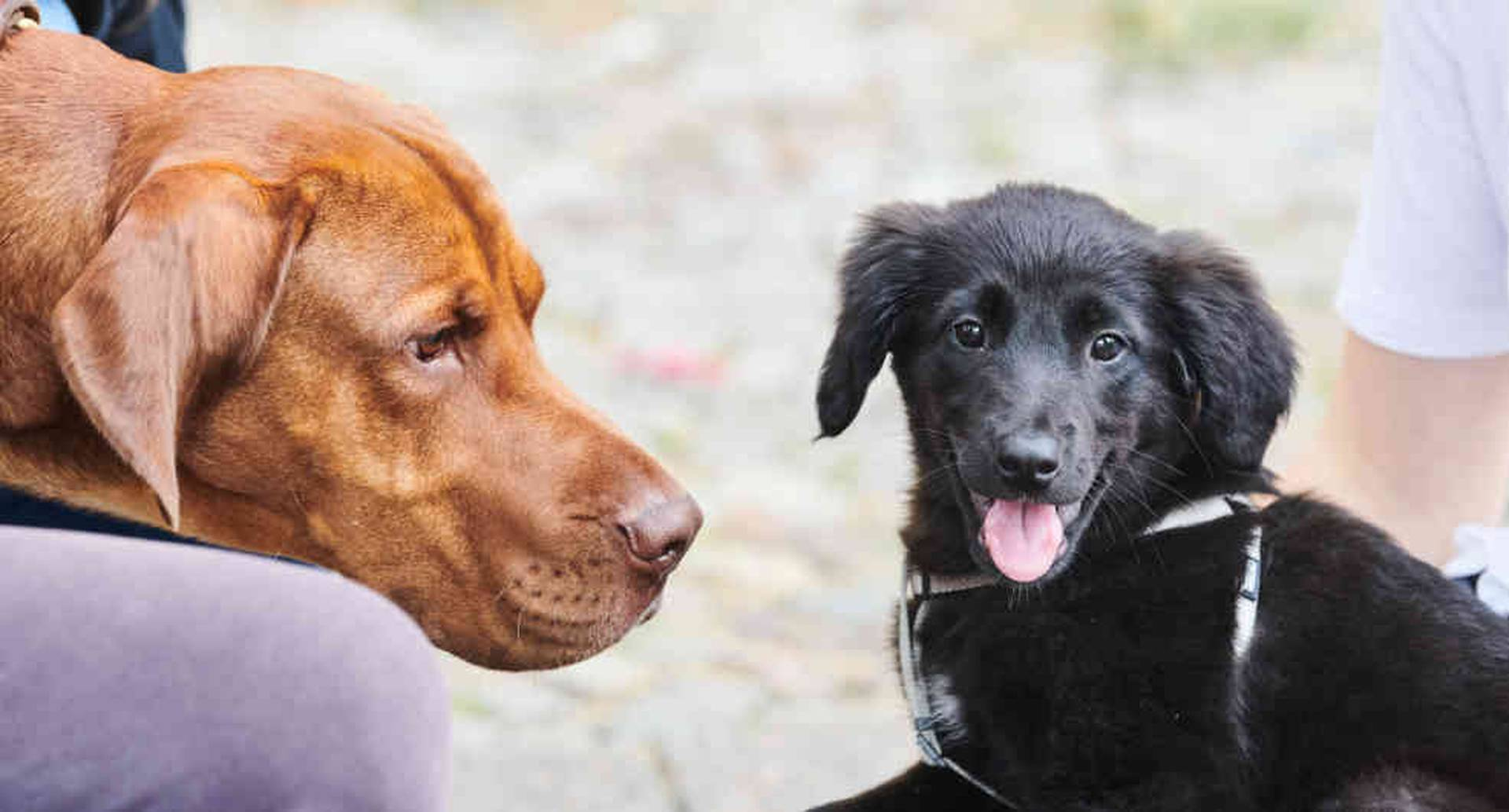 ¿Por qué Kim Jong ordena ir casa por casa a quitar perritos a familias?