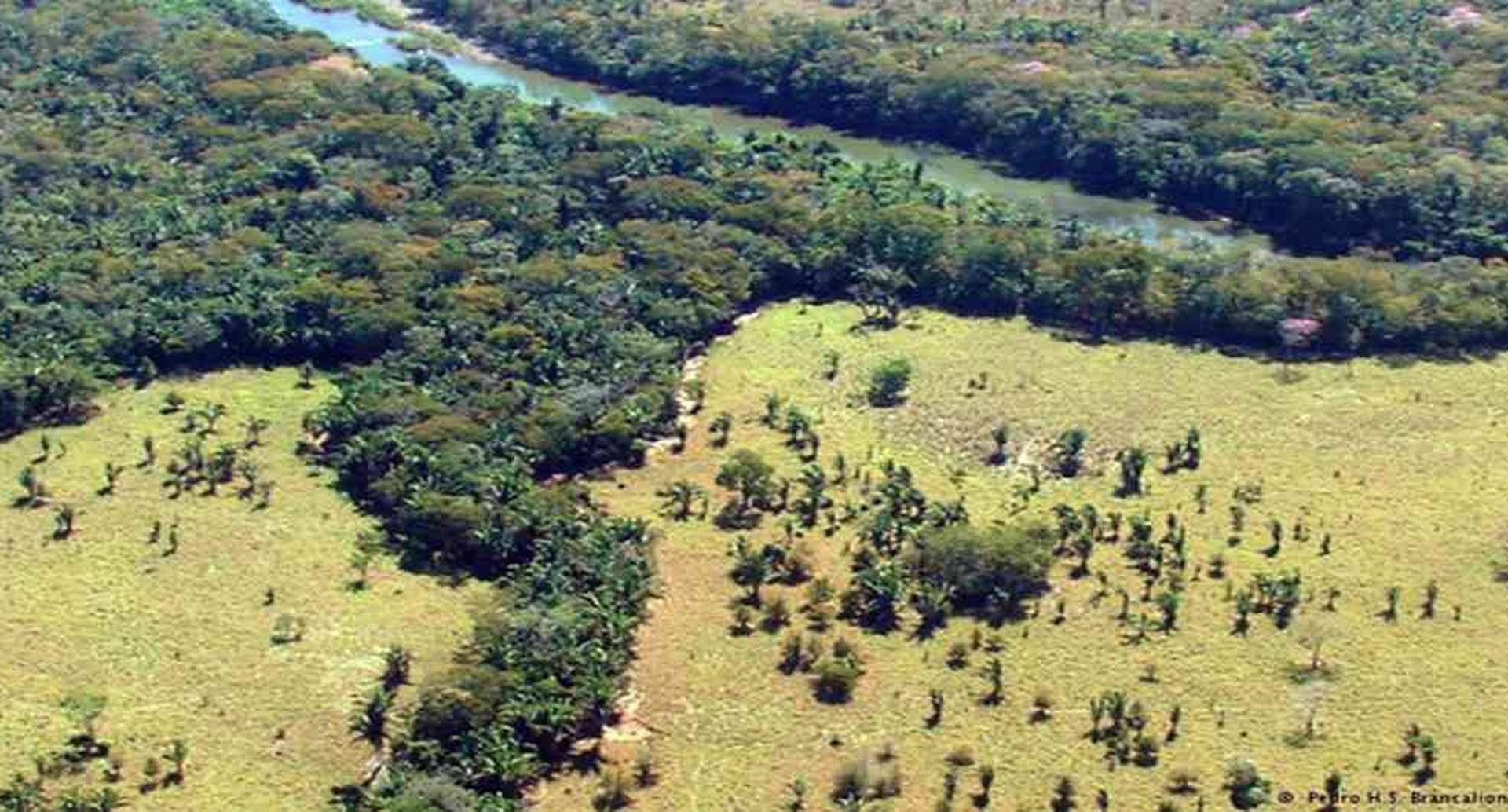 Según el último boletín de detecciones tempranas del Ideam, en la Amazonia se concentra el 75% de la deforestación del país. Foto: archivo/Semana.