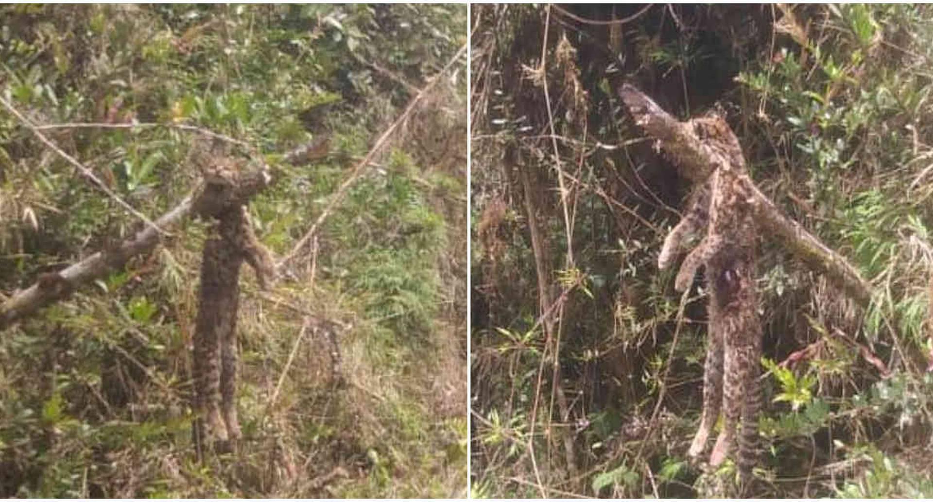 Vecinos del sector atribuyen el hecho a cazadores furtivos. Foto: CAR Cundinamarca.