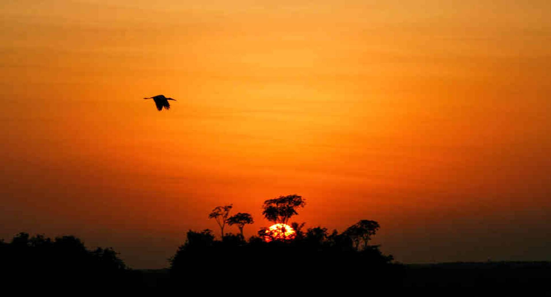 Un típico atardecer llanero, donde los morichales y las aves conviven.