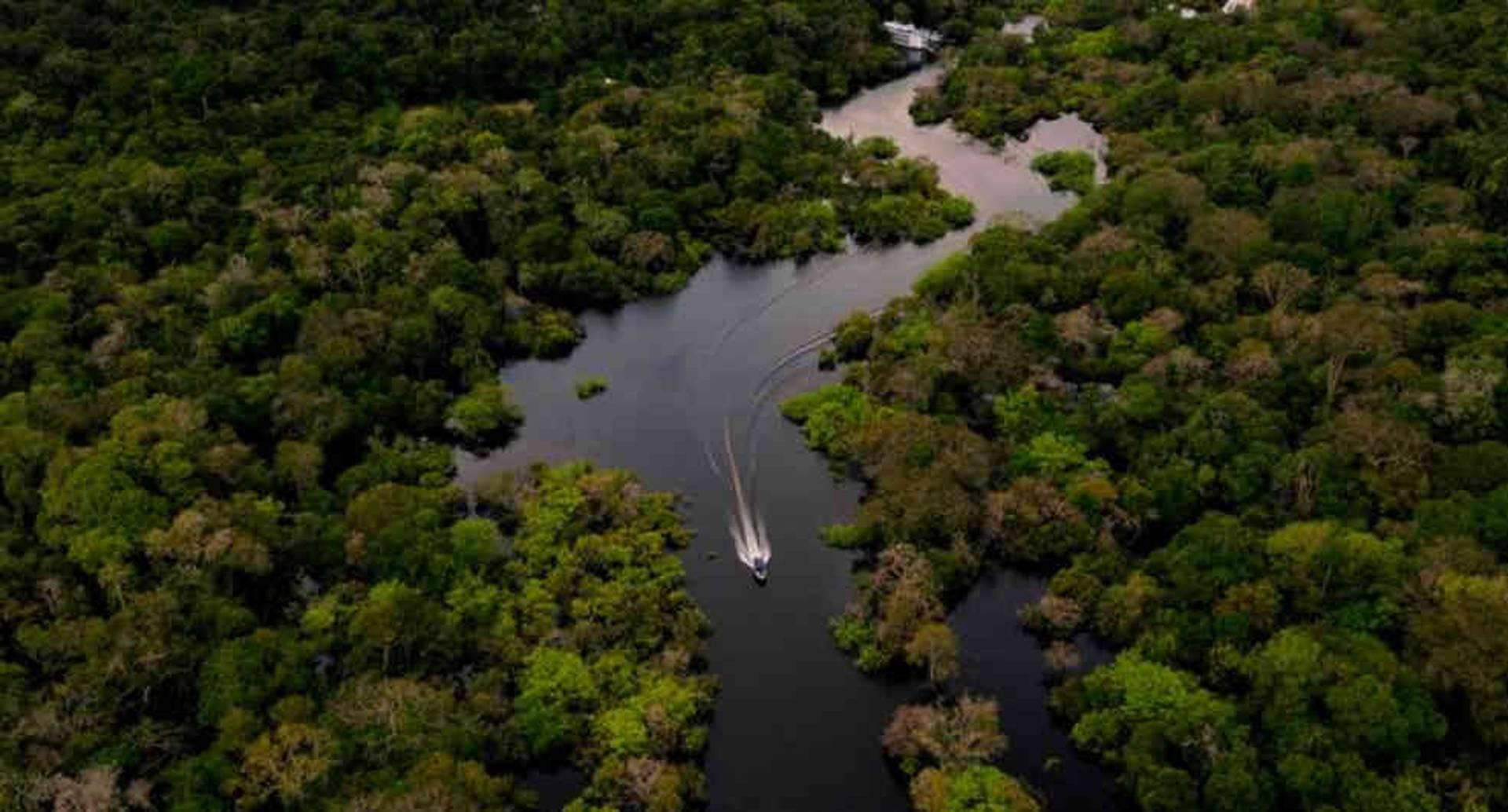 La Amazonia es clave en la lucha contra el cambio climático: almacena alrededor de 130 mil millones de toneladas de carbono, casi el valor de una década de emisiones globales de dióxido de carbono.