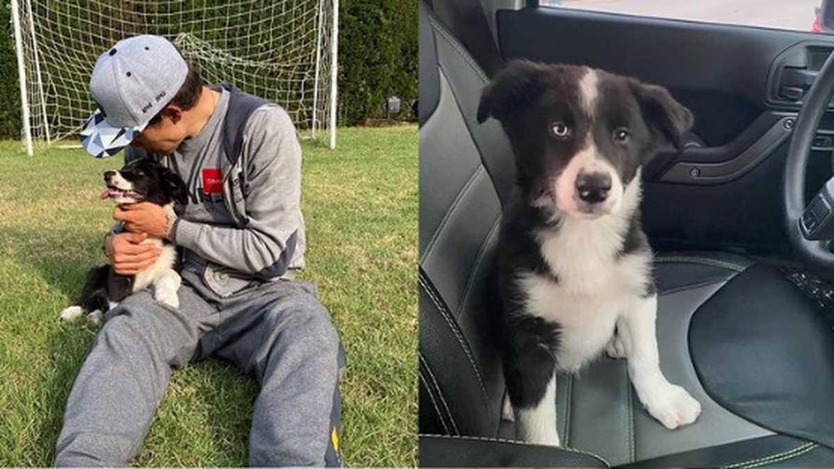 """Está devastado"""": la tristeza de Miguel Ángel López porque su perrito perdió  un ojo tras ataque de un vecino"""