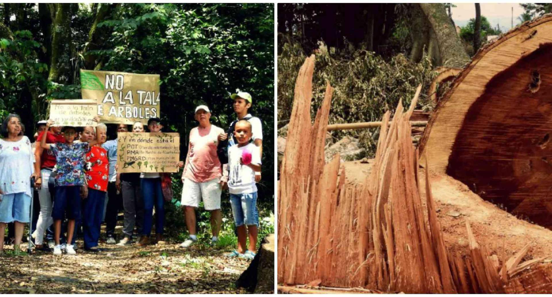 Ambientalistas y comunidad protestan por tala de bosque natural en Cartago, Valle