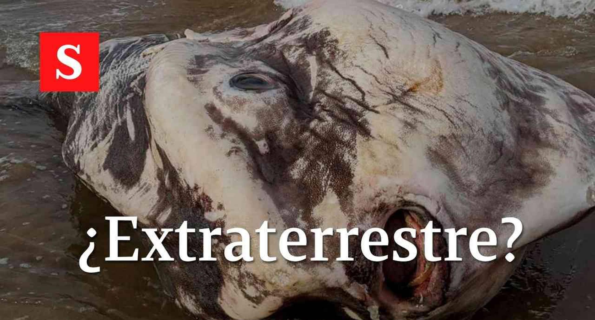 """Extraña criatura con apariencia """"extraterrestre"""" apareció en Australia"""