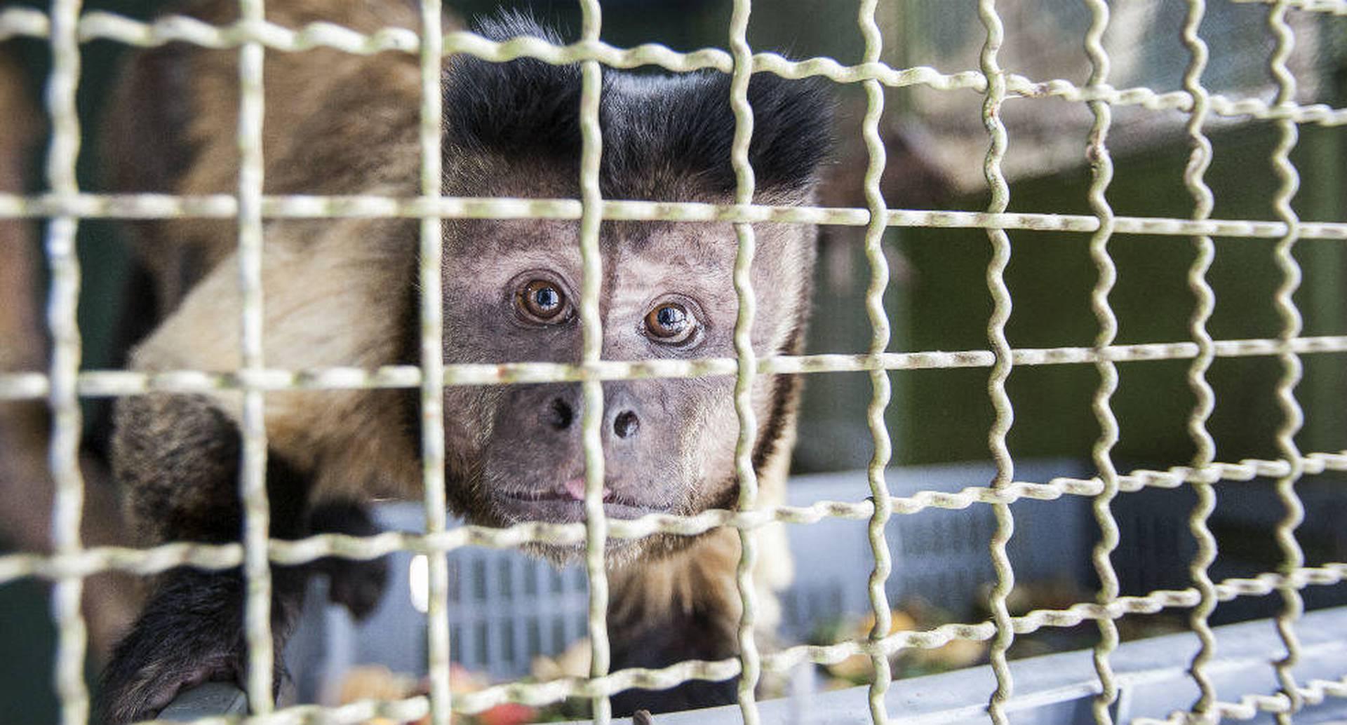 La prohibición del consumo de animales salvajes en China redujo el tráfico de fauna silvestre en el mundo, ya que este país es uno de sus principales promotores. Foto: archivo/Semana.