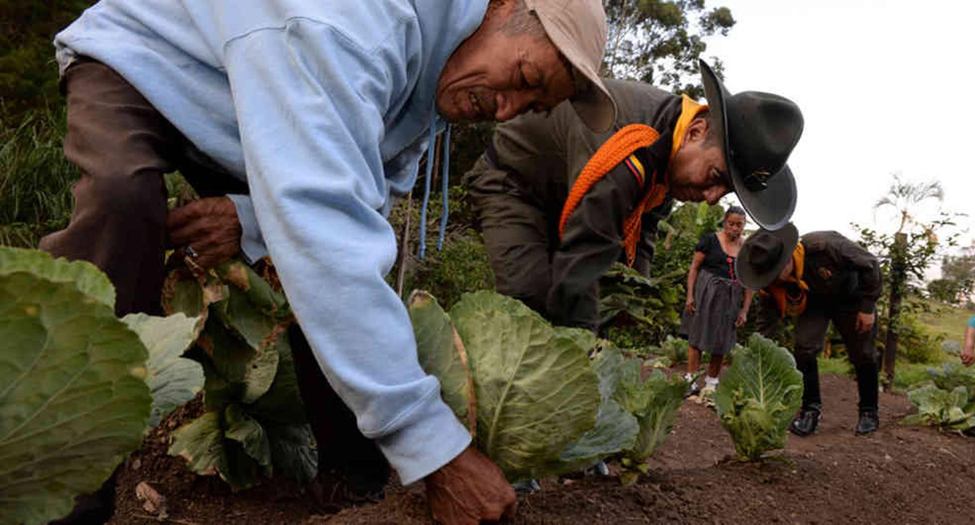 La idea de la Dirección de Carabineros es desplegar grupos de guardabosques en el Parque Arví, en el Valle del Cocora, en el Tayrona y en Leticia.