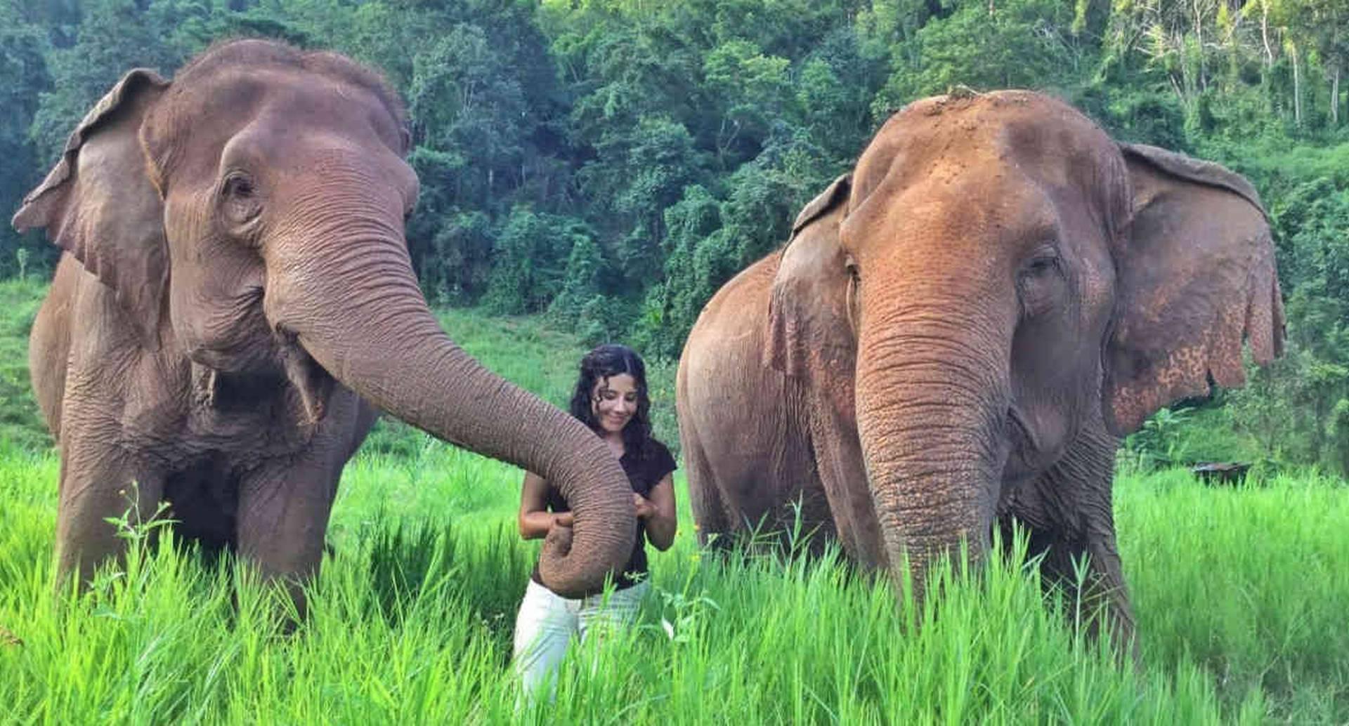 Diana Muñoz ha logrado gracias a su labor que varios elefantes que vivían en cautiverio y que eran sometidos a torturas, hayan sido liberados en santuarios naturales de Tailandia. En la foto aparece con Nong Pop Más Pong y Mae Pong junto a ella en el Elephant Nature Park.