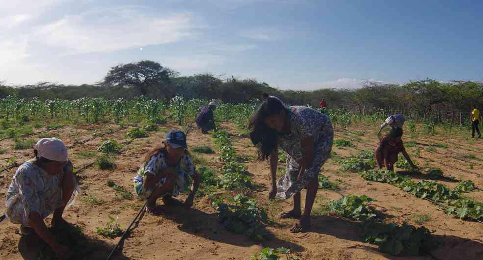 Una de las brechas que el informe que hace visibles son las dificultades que deben sortear las mujeres rurales para trabajar