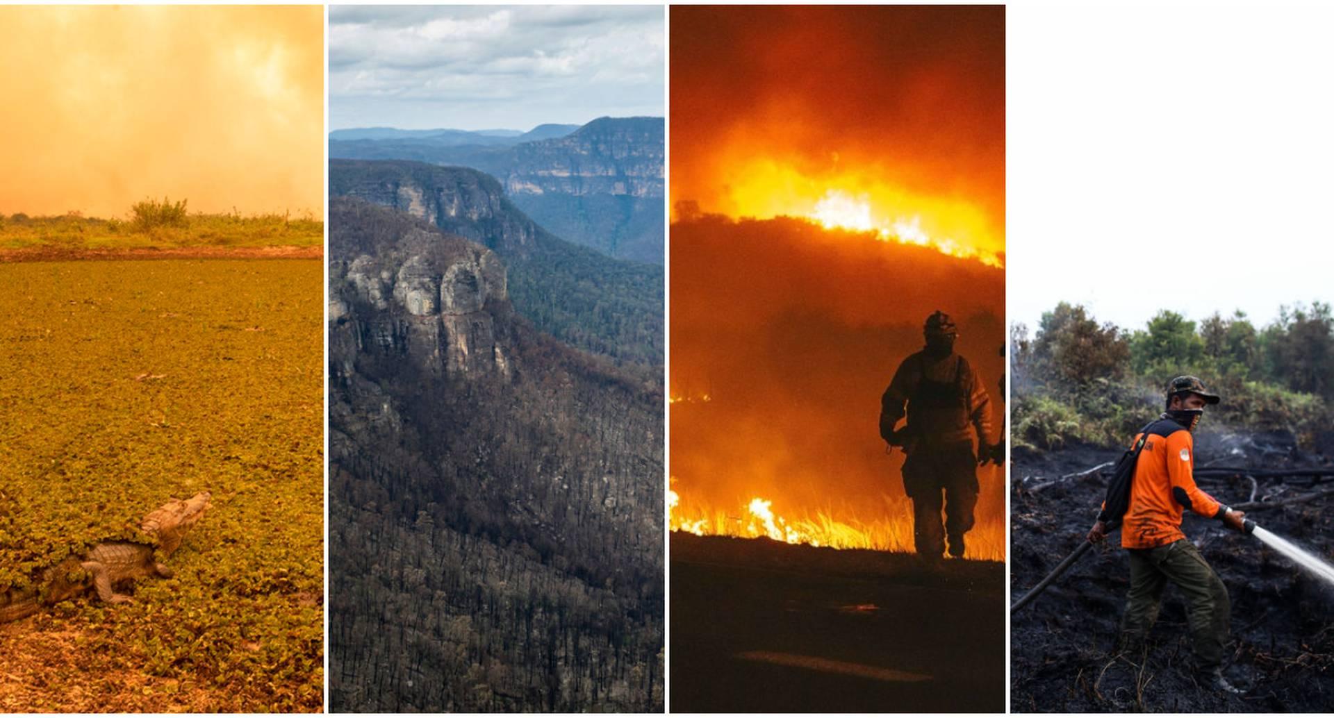 La destrucción sistemática de ecosistemas y su biodiversidad por cuenta de estos fenómenos podría tener graves consecuencias para la humanidad.