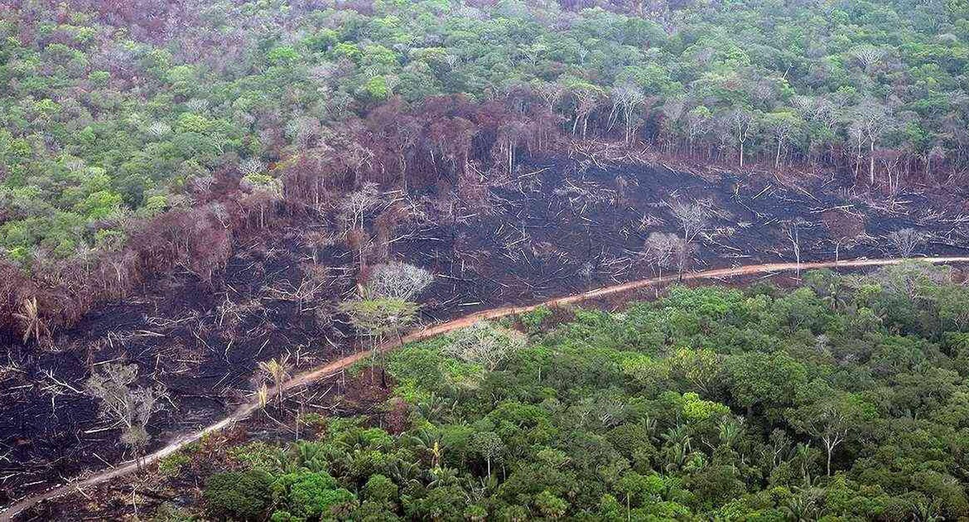 La deforestación es una de las principales causas de los incendios en la Amazonia.