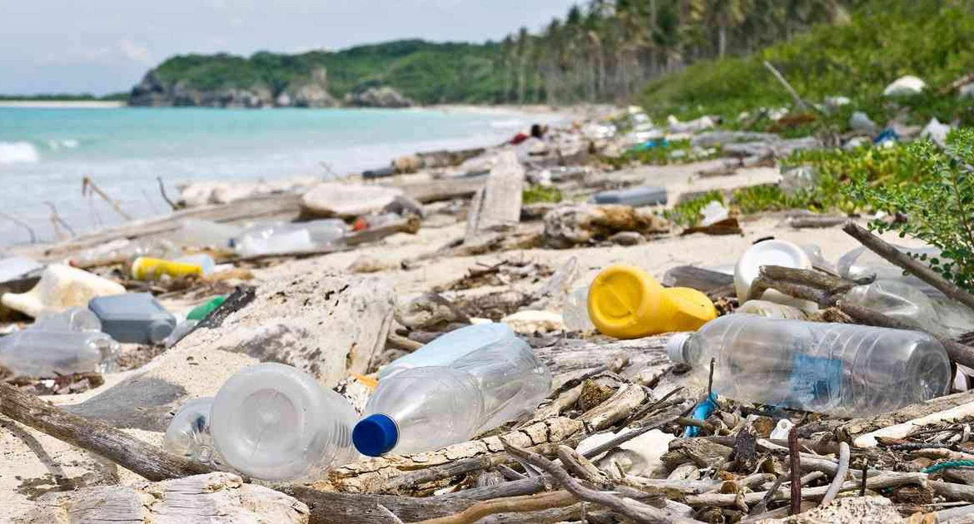 Los materiales plásticos que llegan a los mares están acabando con la vida de muchas especies. Foto: Pixabay