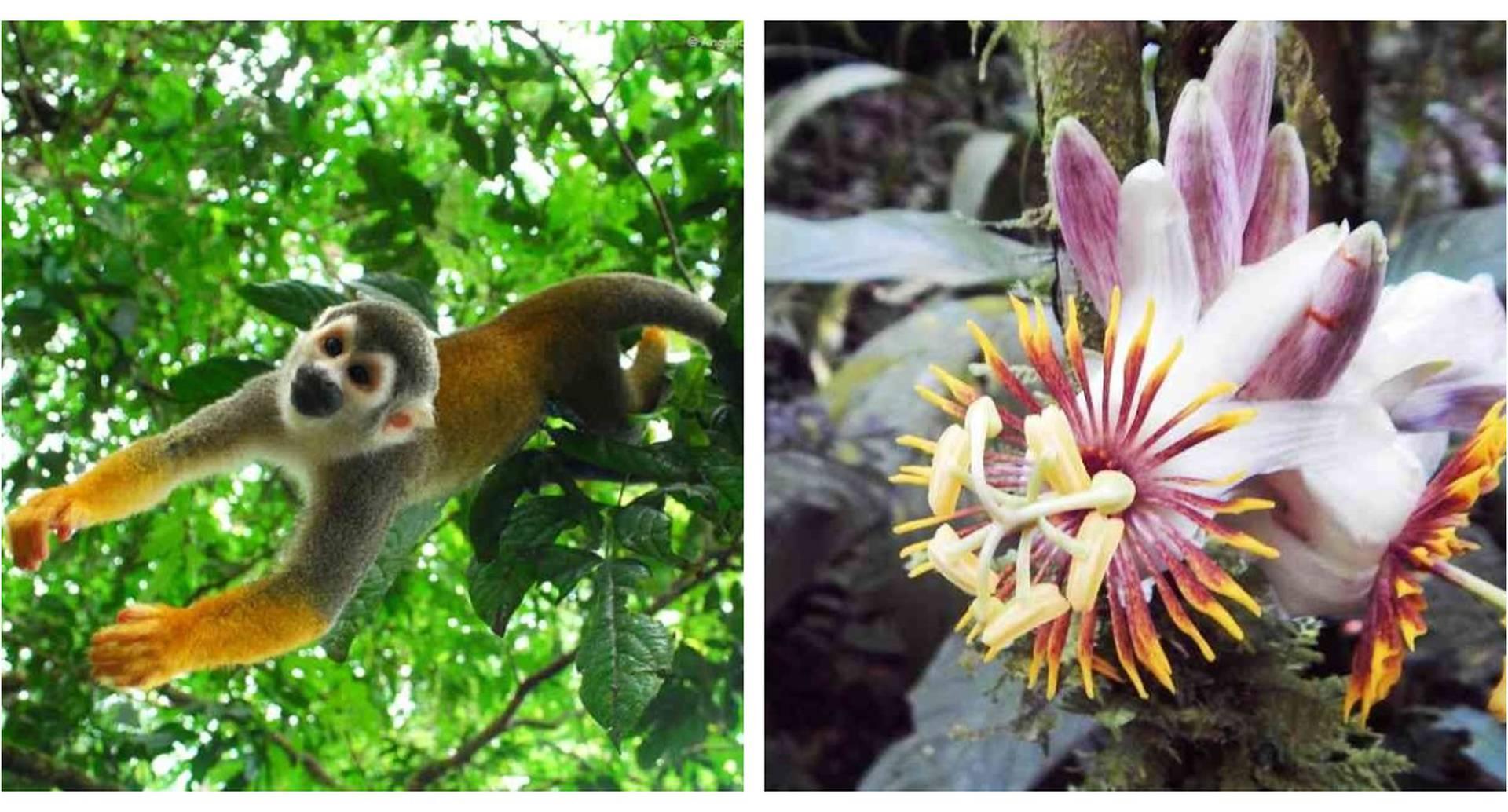 Biodiversidad en parques naturales