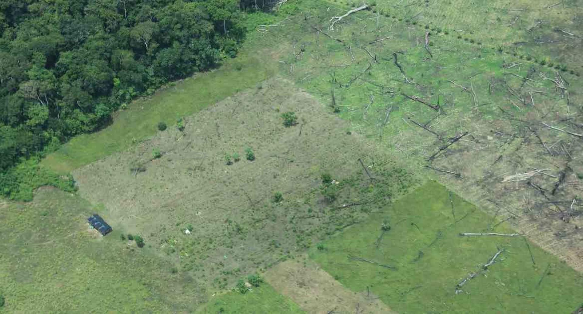 Meta es el segundo departamento más deforestado del país, después de Caquetá. Foto: Rodrigo Botero.