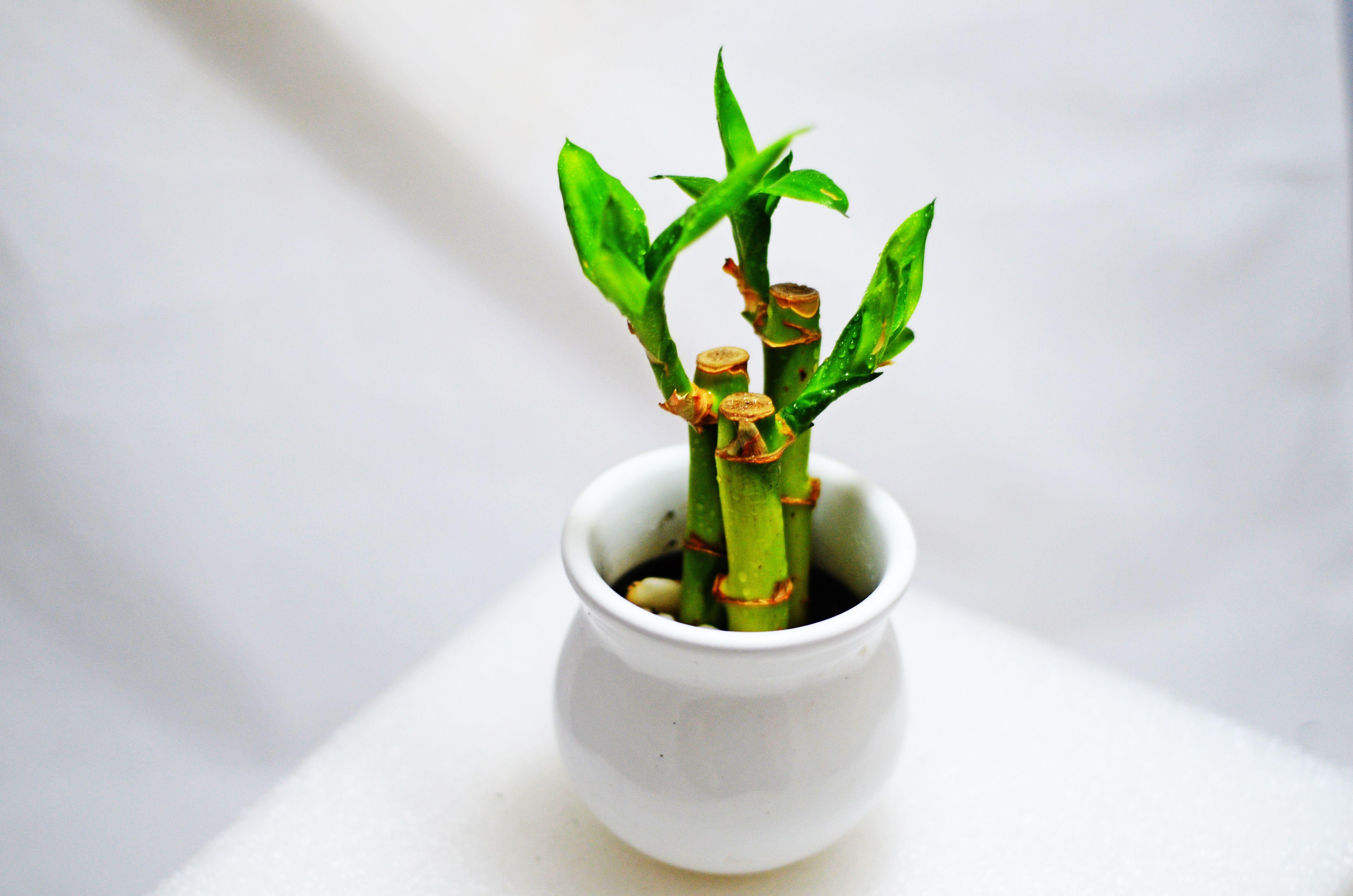 Las 8 Plantas Para Atraer El Dinero Y La Estabilidad En Su Hogar