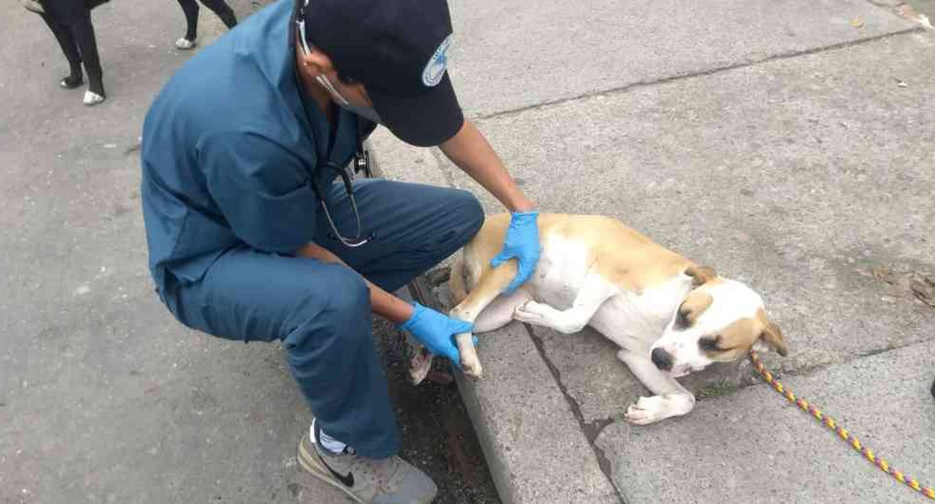 Coronavirus: continúan urgencias veterinarias para animales callejeros