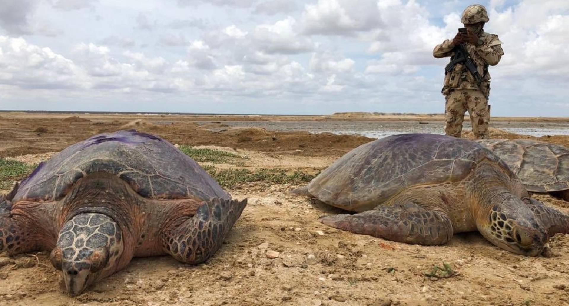 Tortugas incautadas en La Guajira