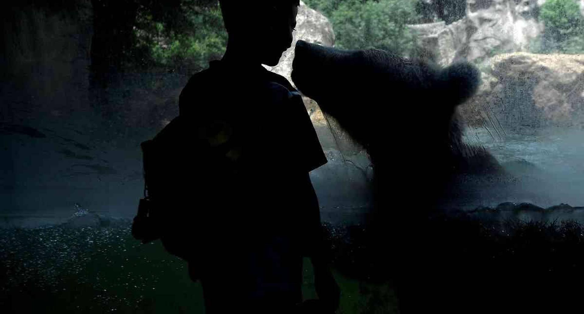 15 de junio - Un niño observa a través de un vidrio un oso que se refresca en un estanque de agua en el zoológico de Roma.  FOTO: Filippo MONTEFORTE / AFP