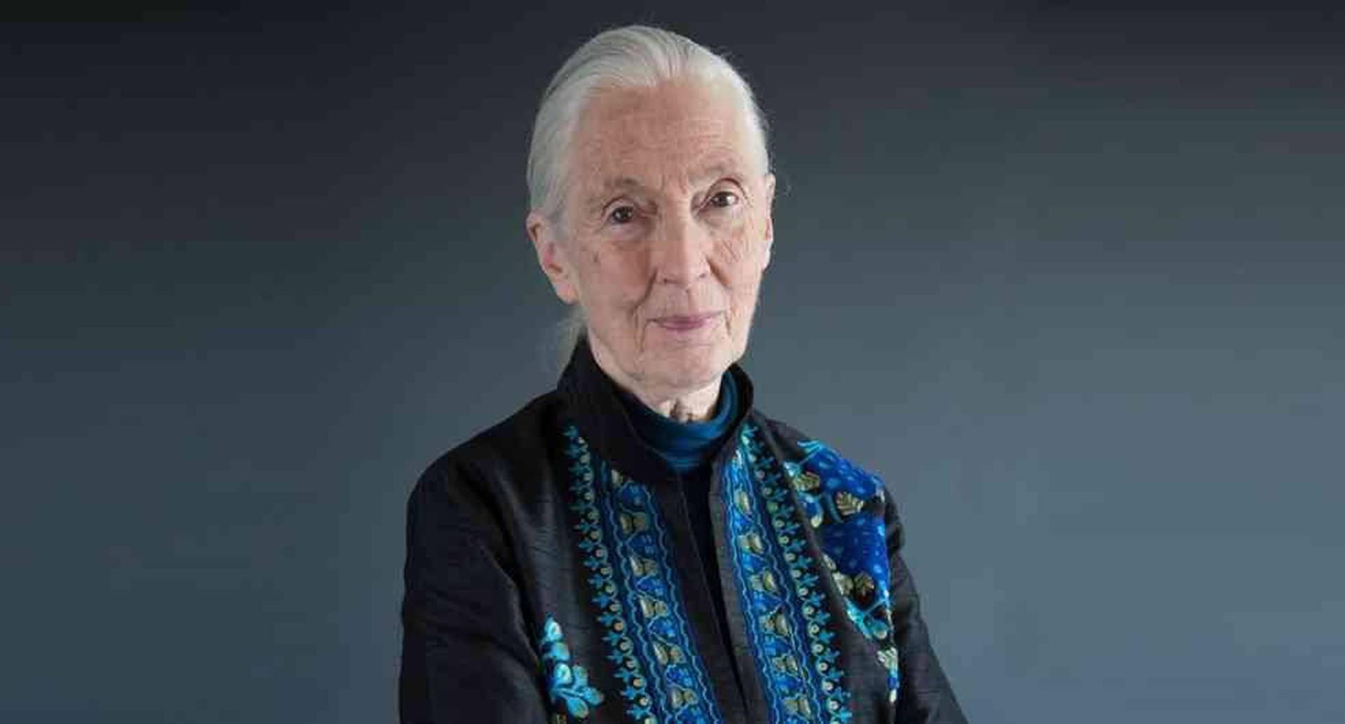 La doctora Jane Goodall envió un mensaje de esperanza a la humanidad en medio del confinamiento por la covid-19