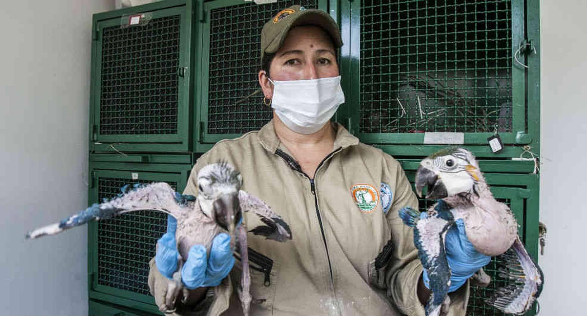 Isabel Gaitán, cuidadora del Centro de Fauna Silvestre de Bogotá.