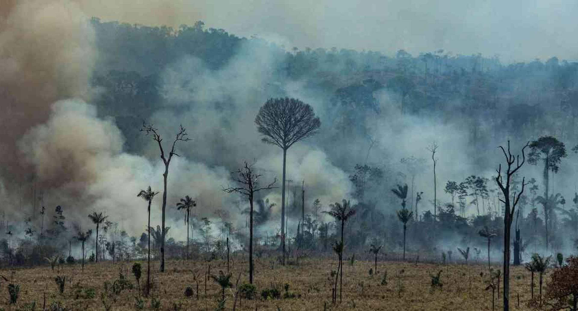 Los incendios en Brasil van de la mano con la deforestación. Foto: GreenPeace