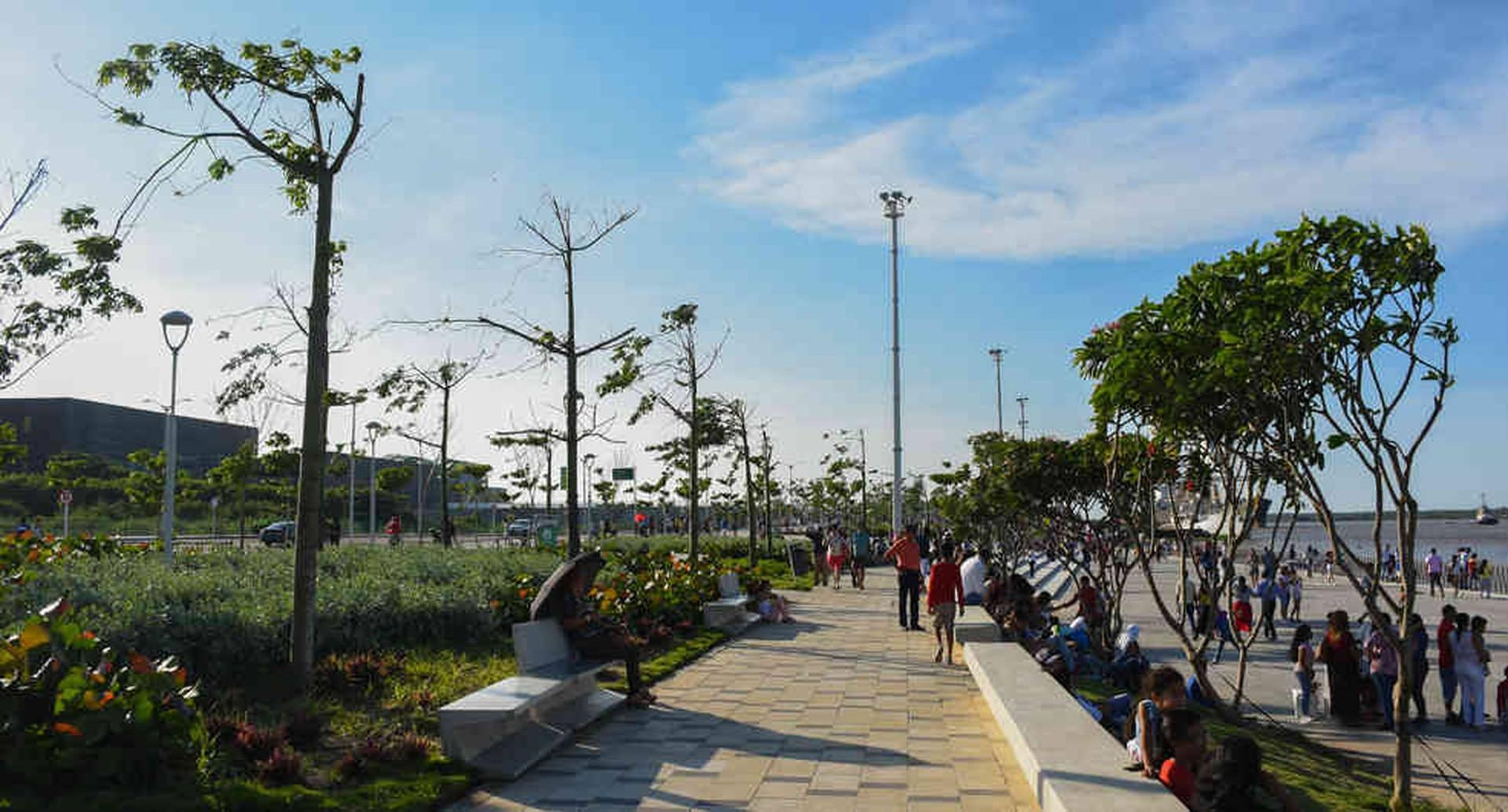 El programa 'Siembra Barranquilla' se encarga de la siembra y la preservación de más de 250.000 especies de árboles en la ciudad.