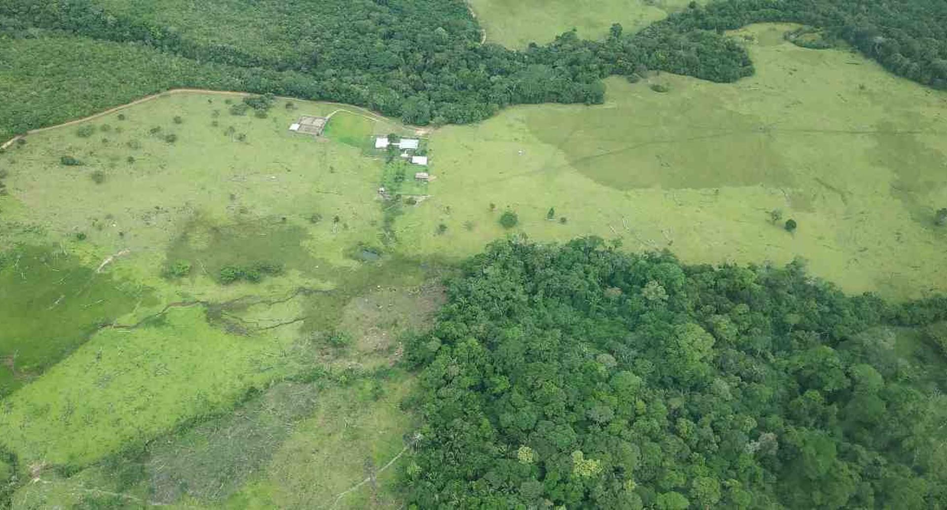 La Amazonia colombiana sigue como la principal víctima de la deforestación en Colombia.